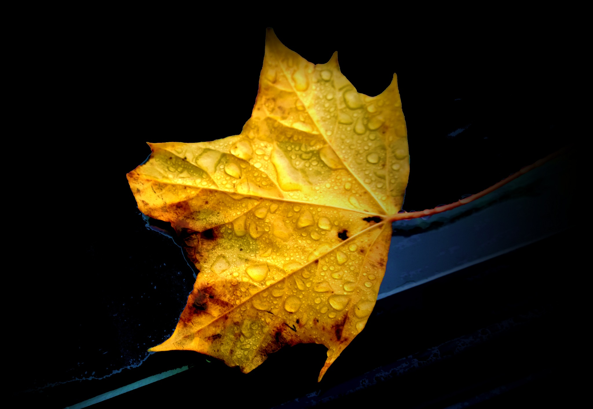 leaf 5 by Terry Dunn