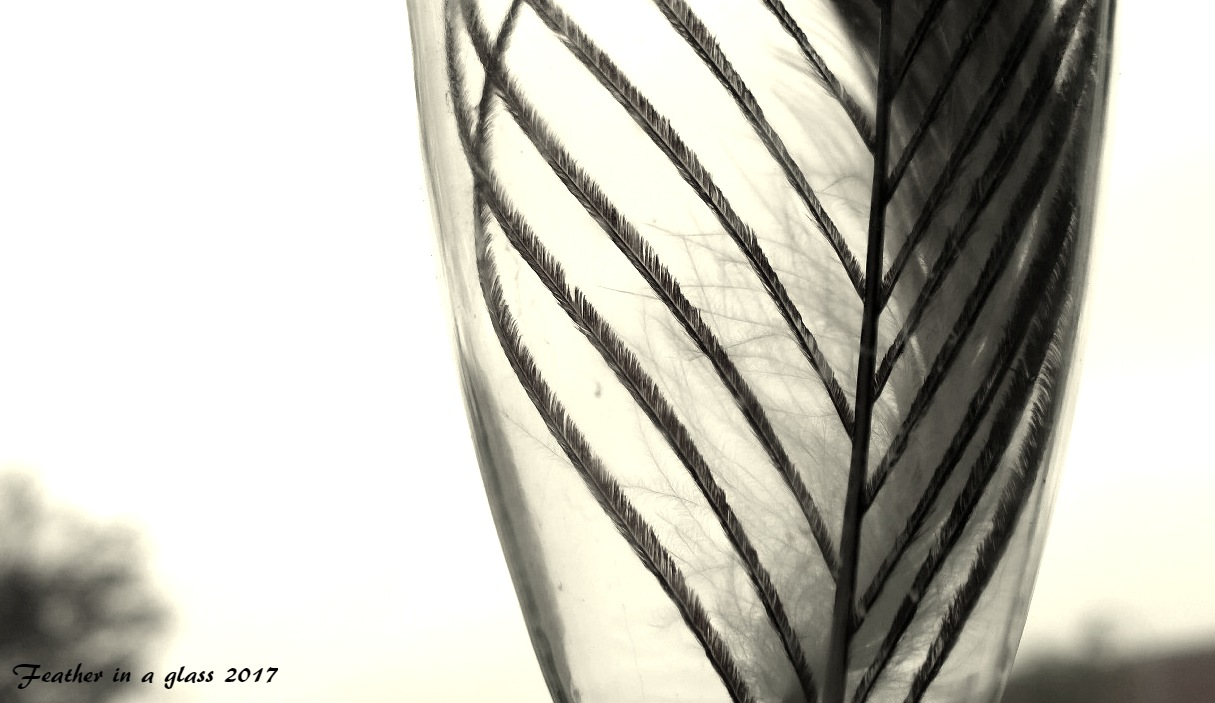 feather in a glass by Terry Dunn