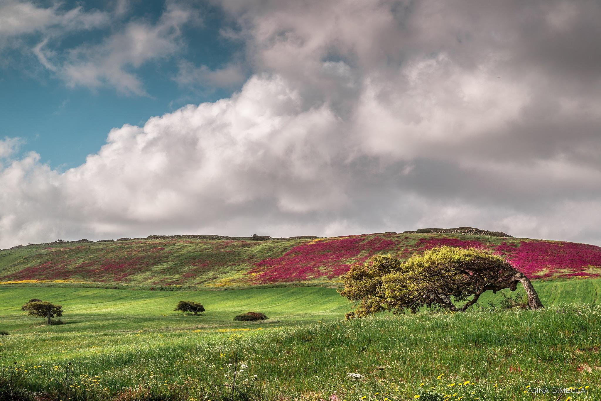 Spring of Sardinia by annasimb