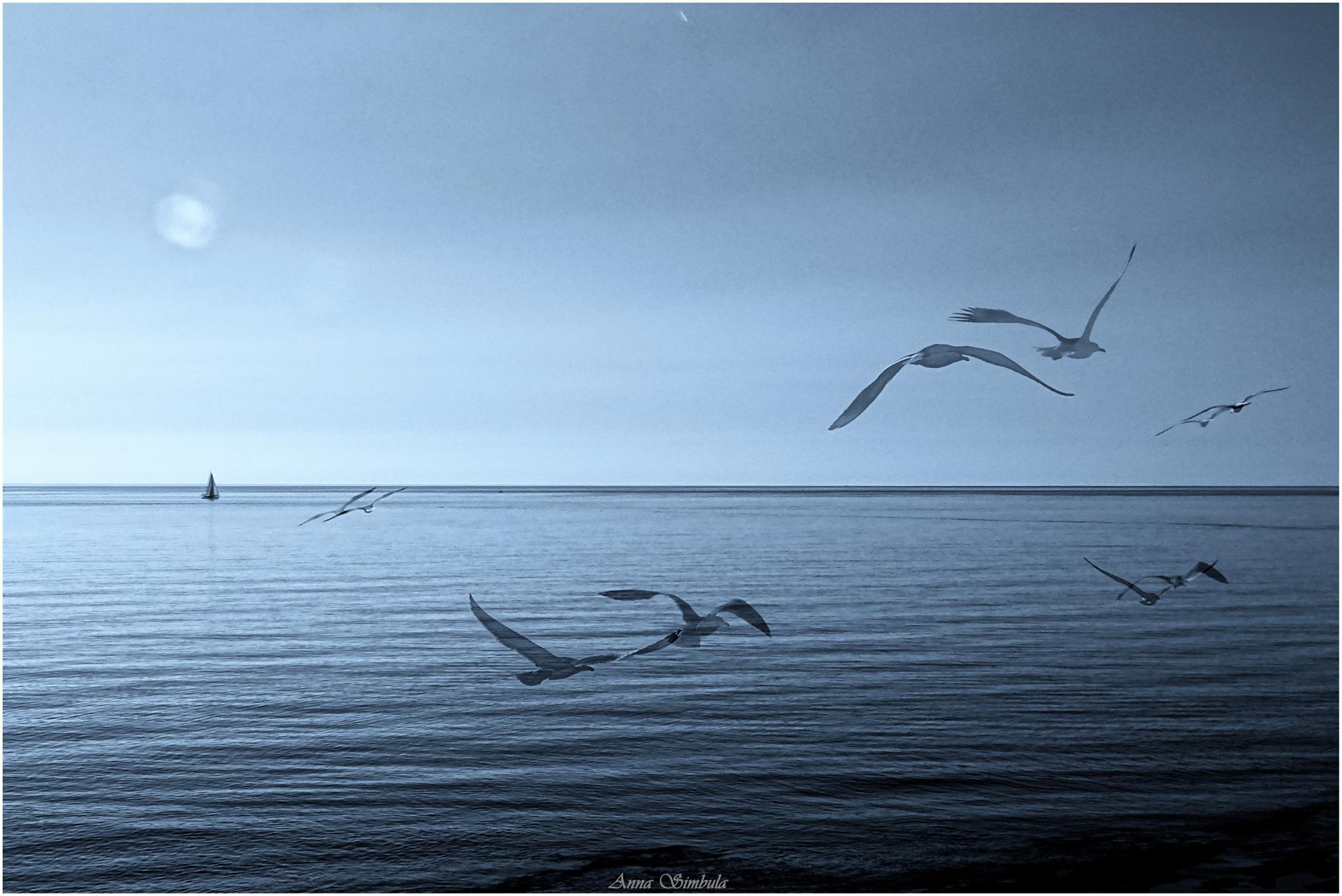 Freedom by annasimb
