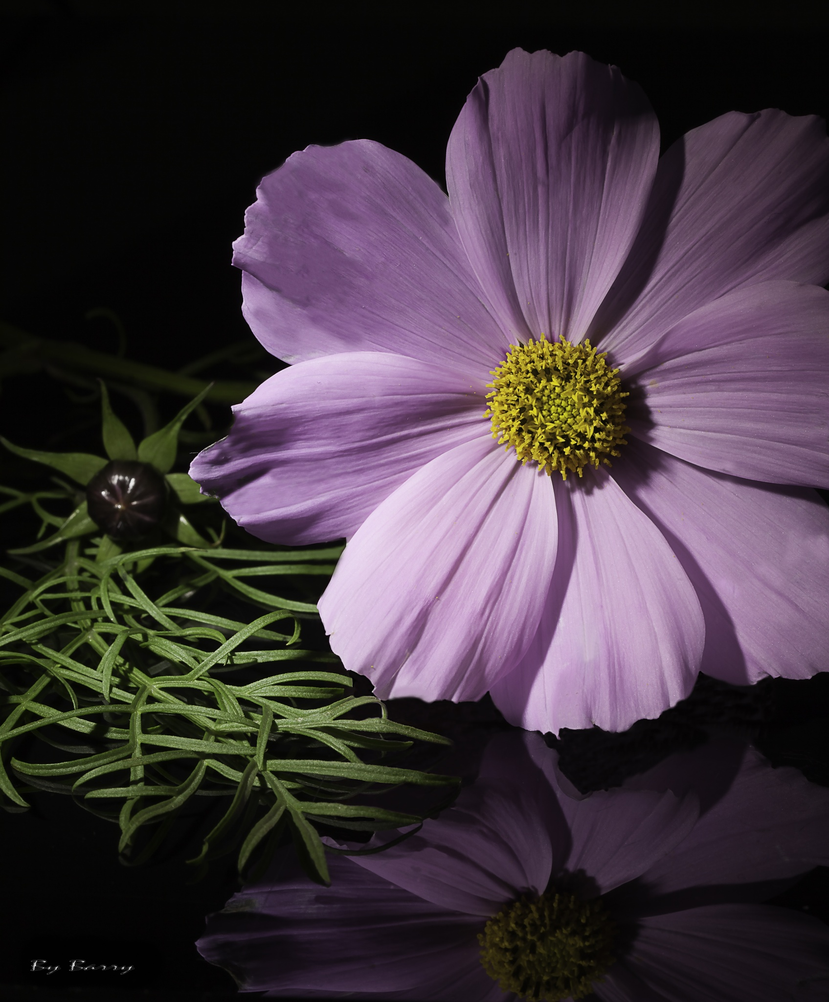 Flower  by Barry