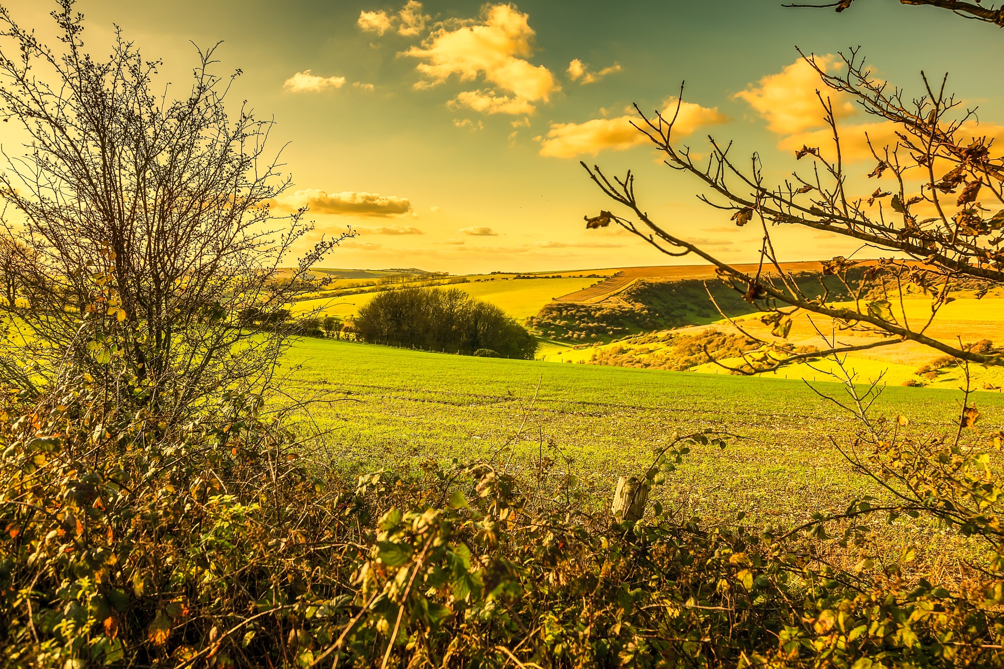 The Sussex Downs 2 by Barry