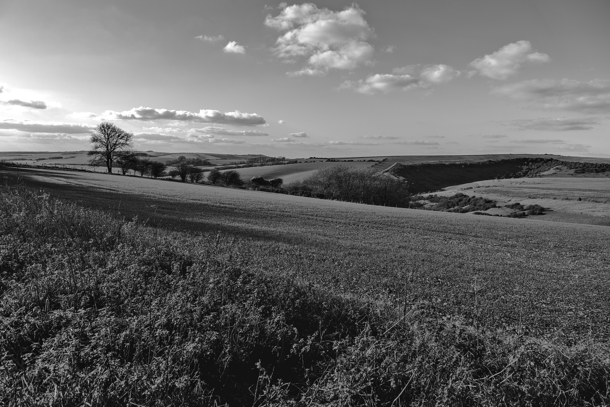 The Sussex Downs  by Barry