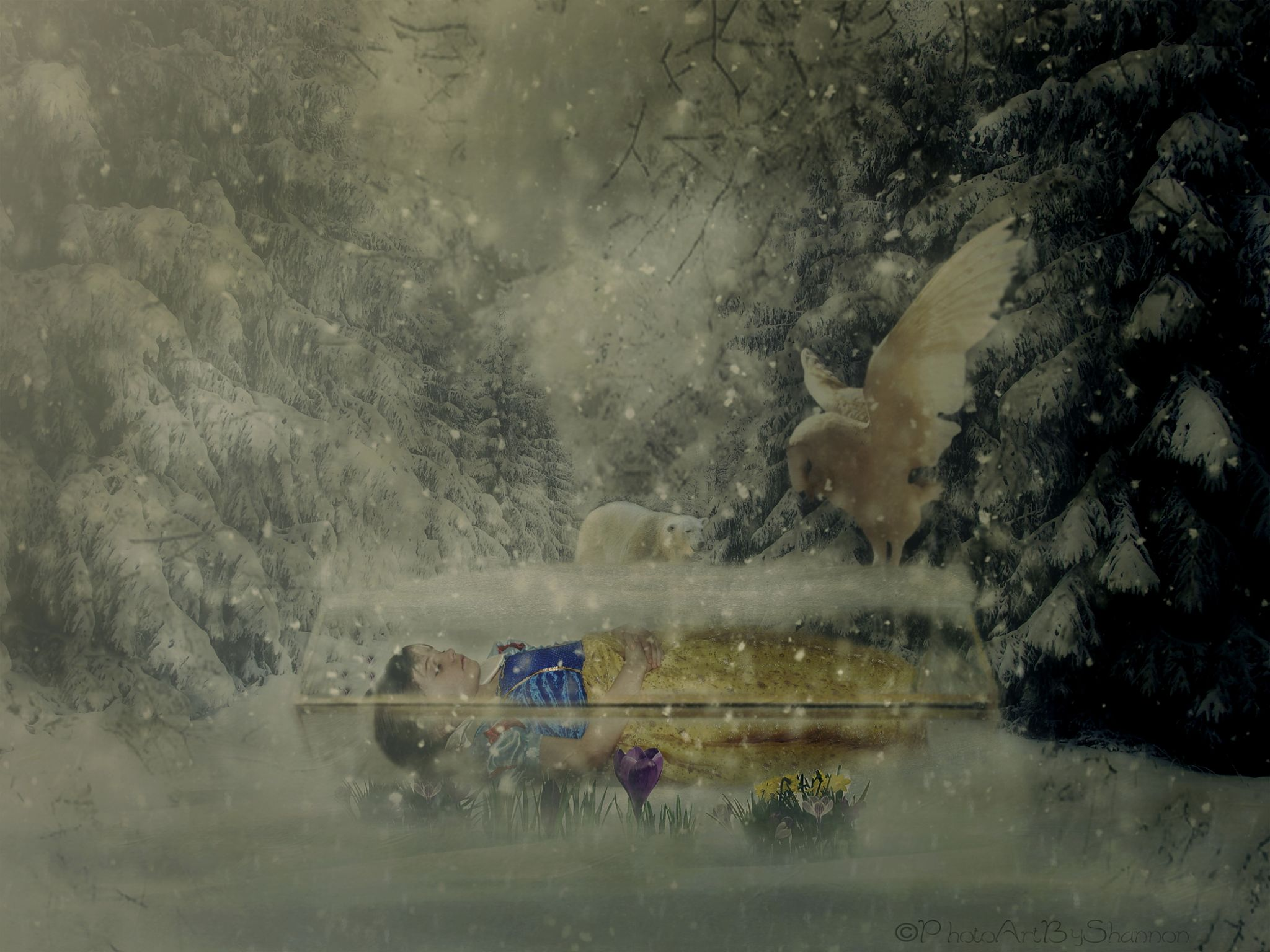 Snow White.... by Shannon Hreha-kilgore