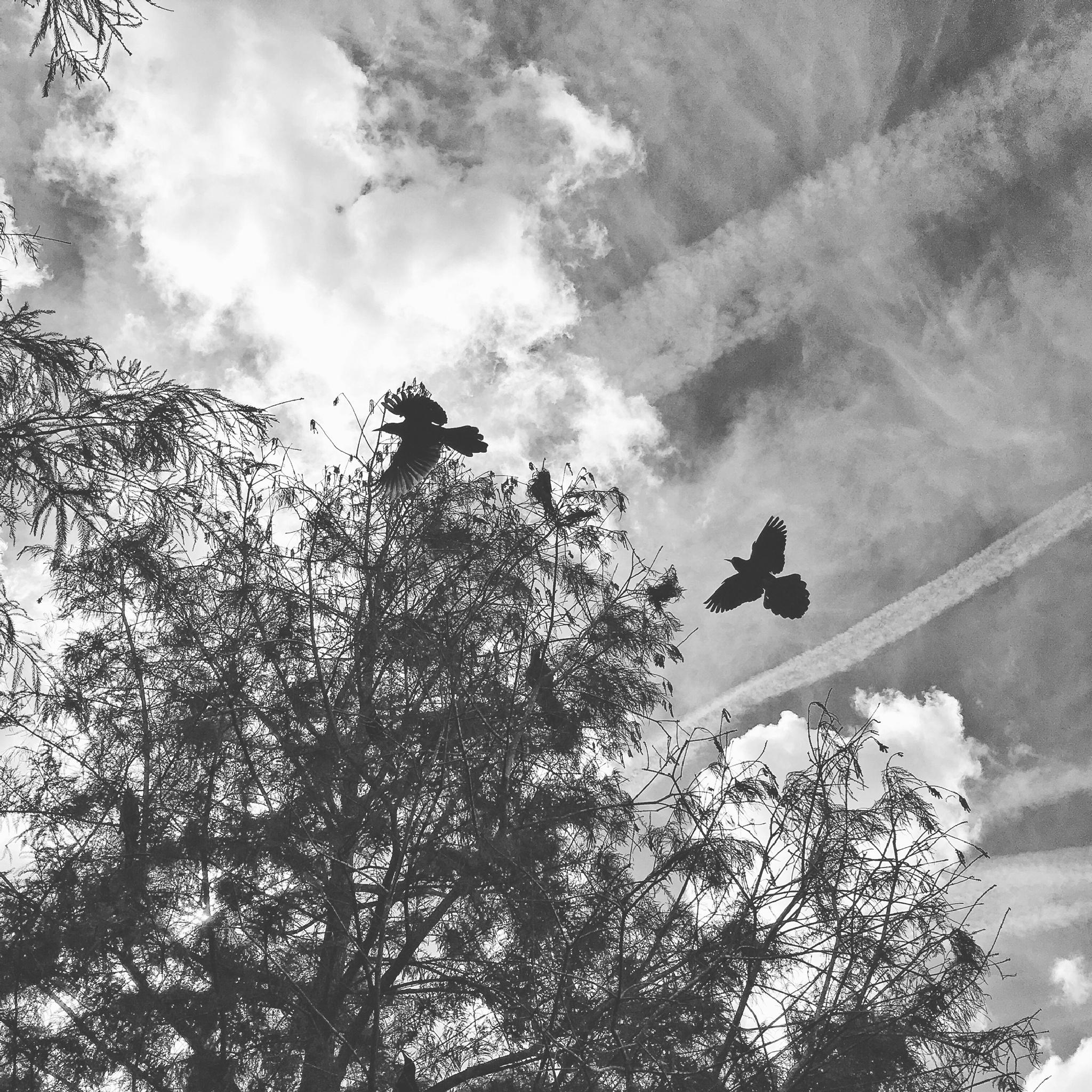 Birds by TammyRaybould