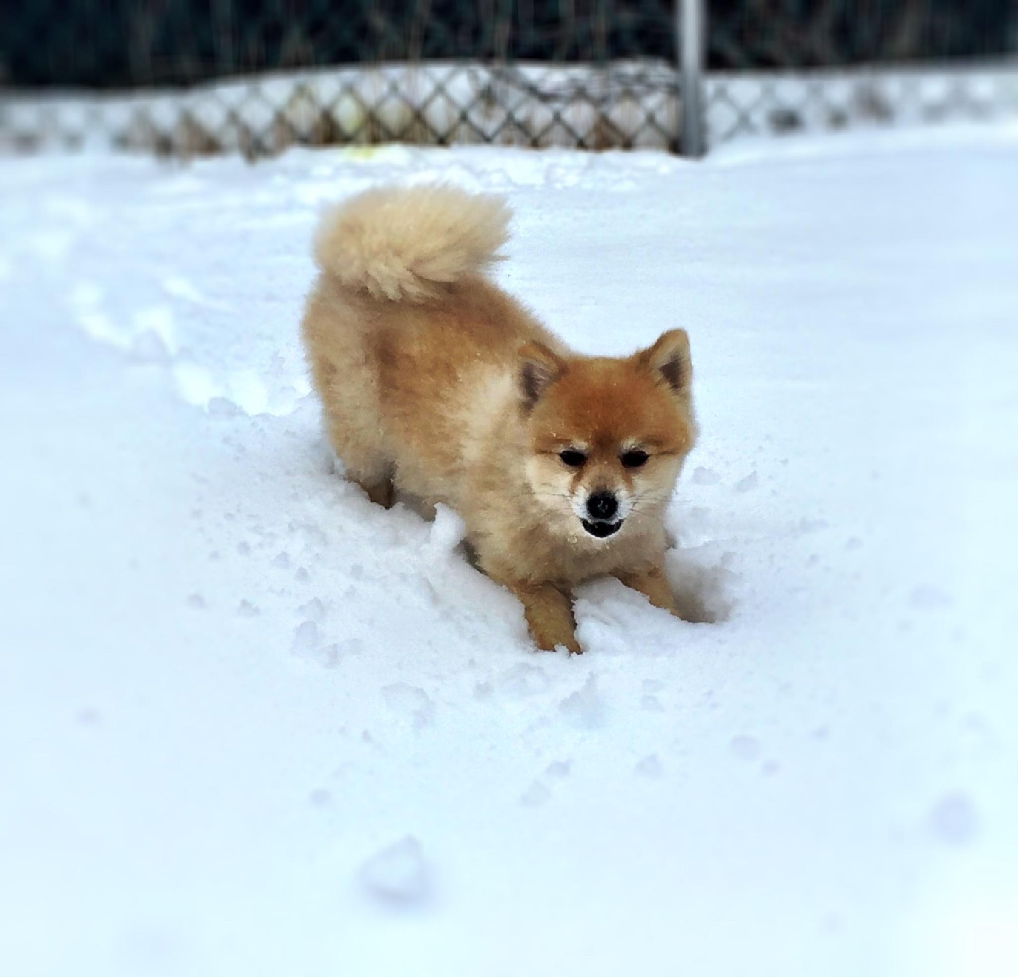 Benji loves the snow by Joan Sinden