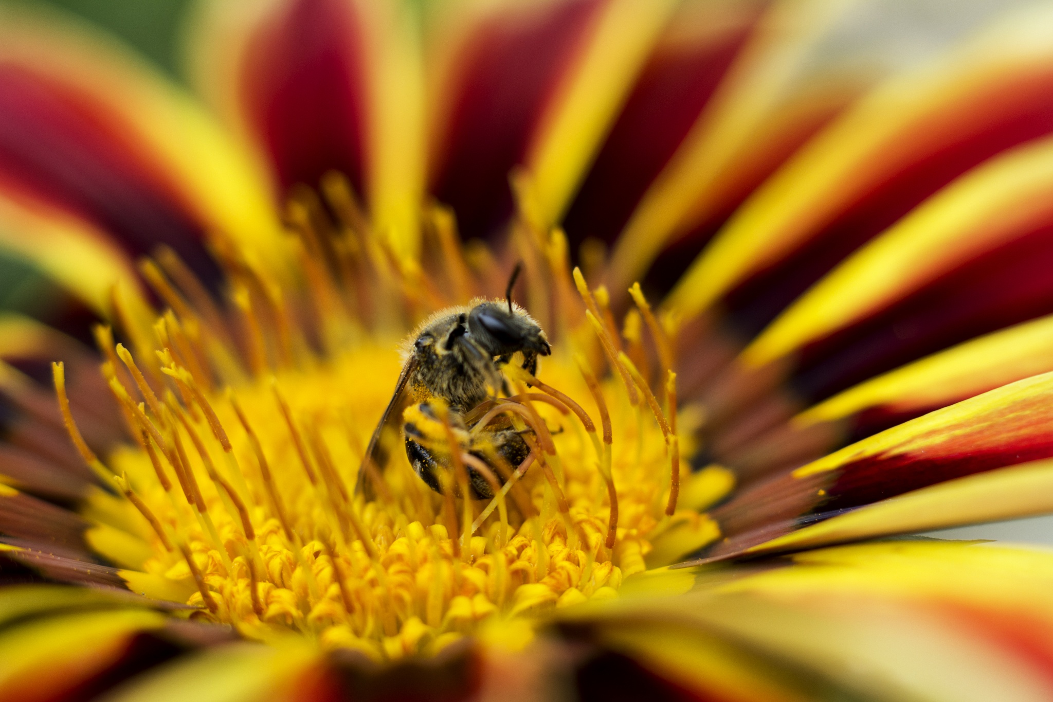 Happened To Bee by Scott Hryciuk