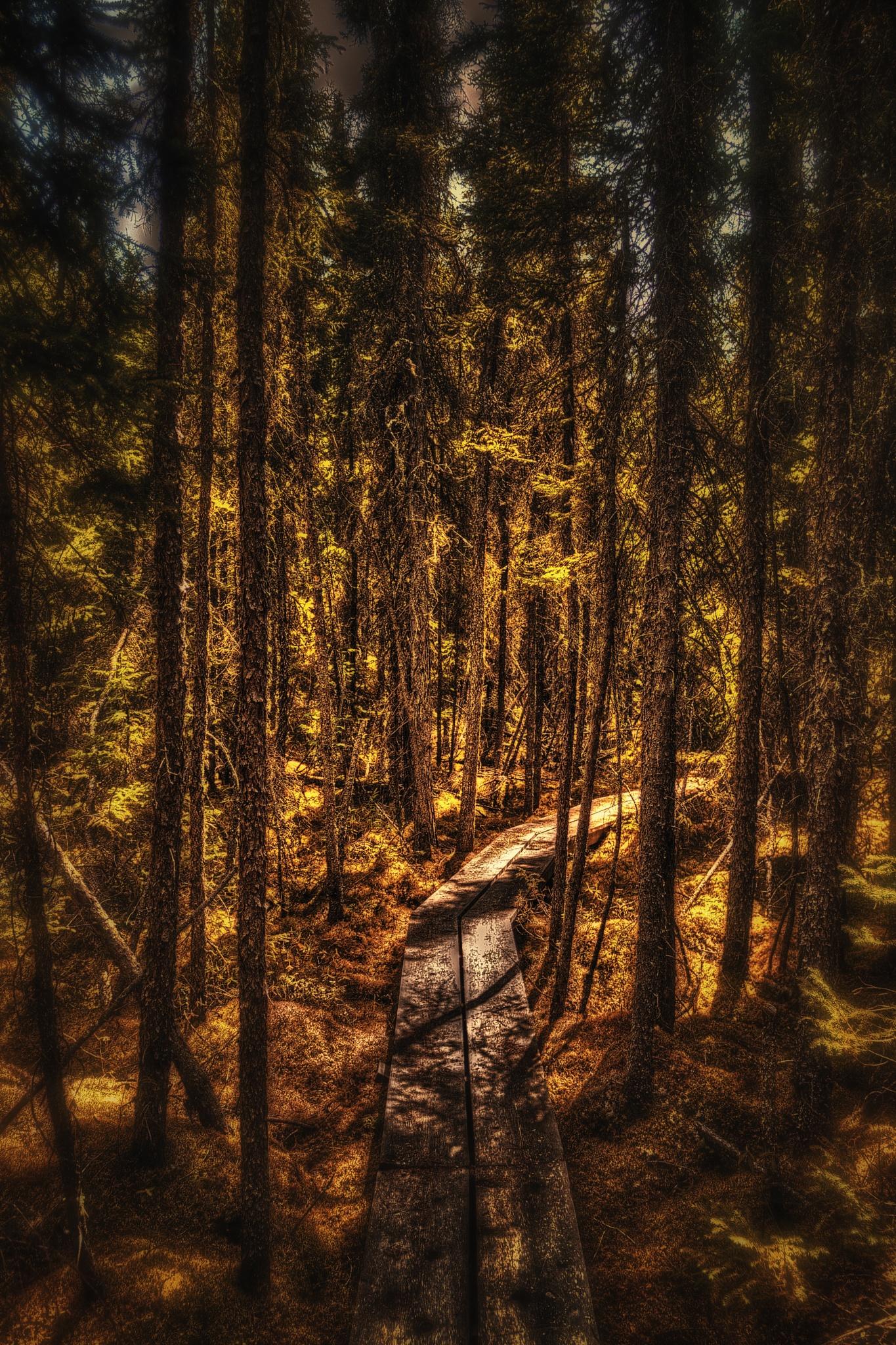 The Path Less Taken by Scott Hryciuk