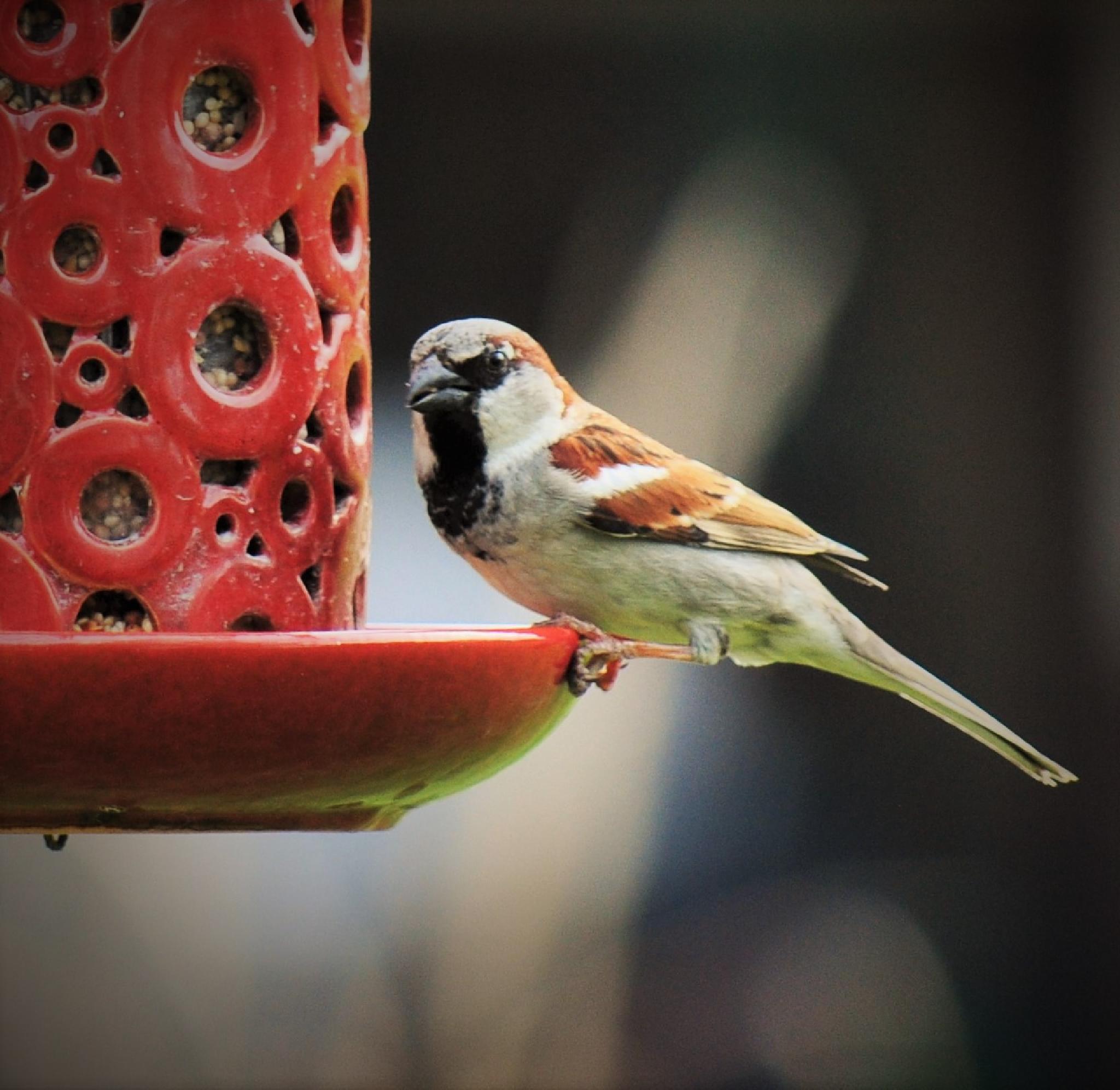 Small Bird by Julie Sprankel Hatfield