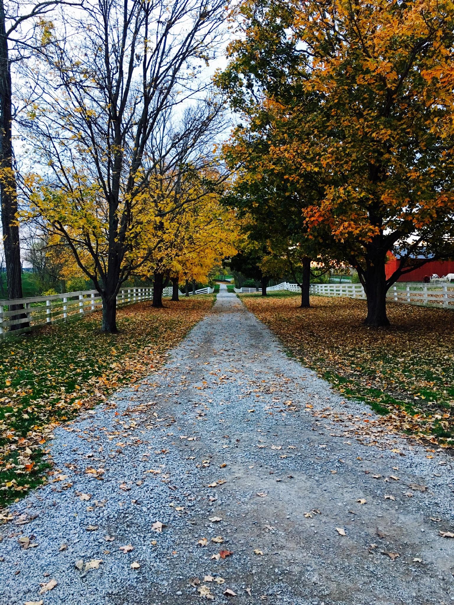 Country road by Julie Sprankel Hatfield