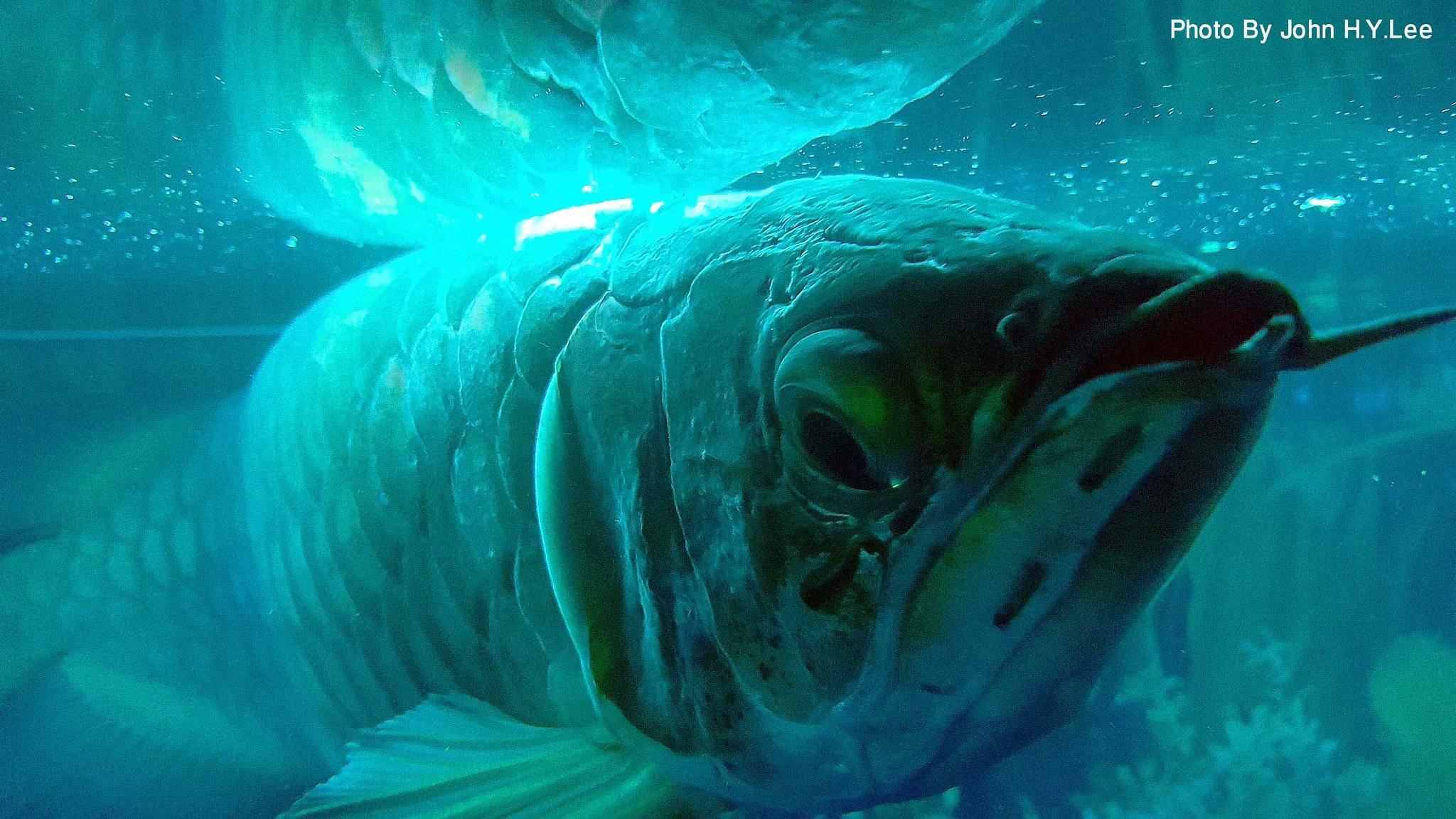 The Fishy Look by John H.Y.Lee