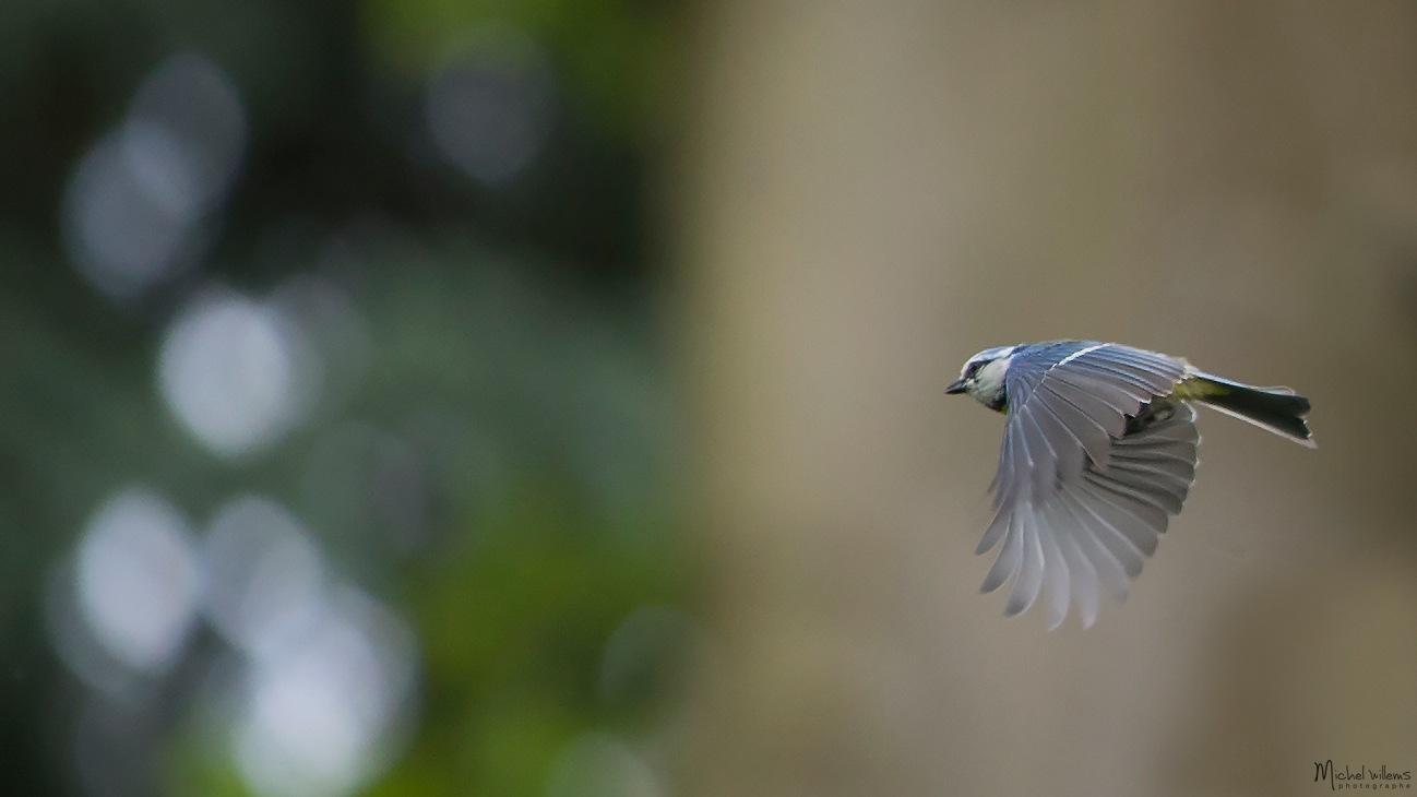 Bird by Michel Willems