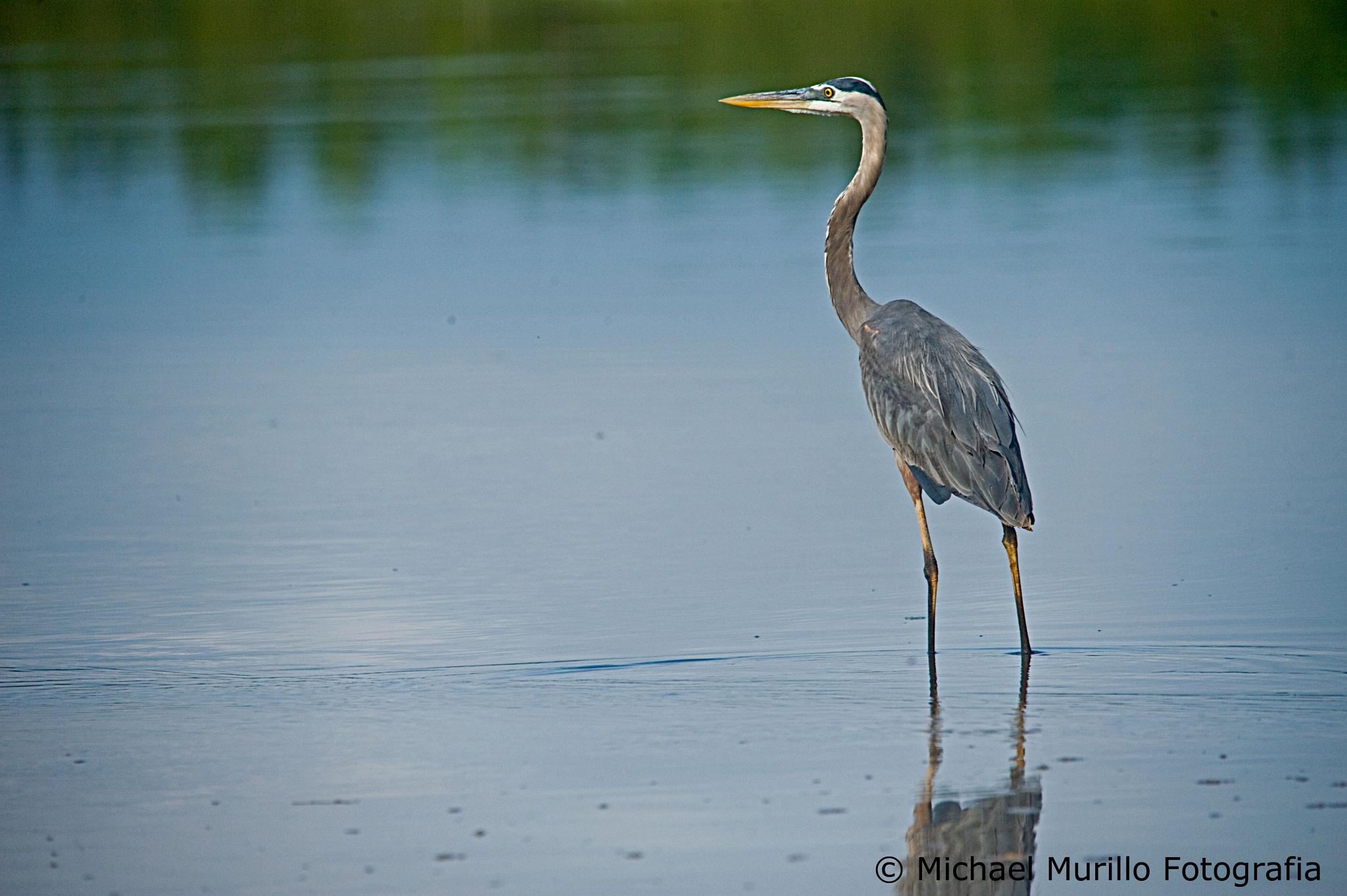 Photo in Animal #animals #bids #wildlifephotographer