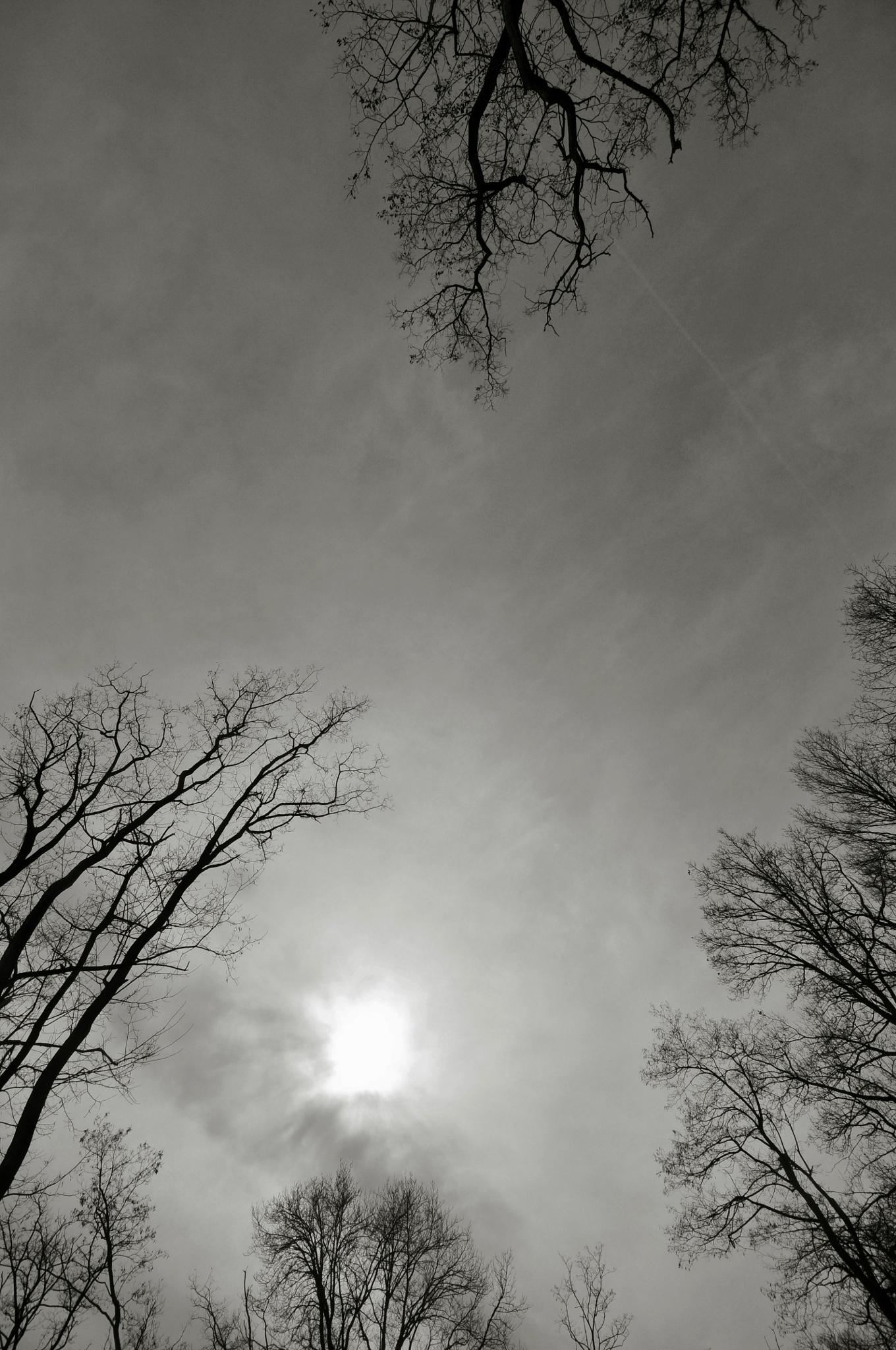 Looking up by JeanGregoireMarin