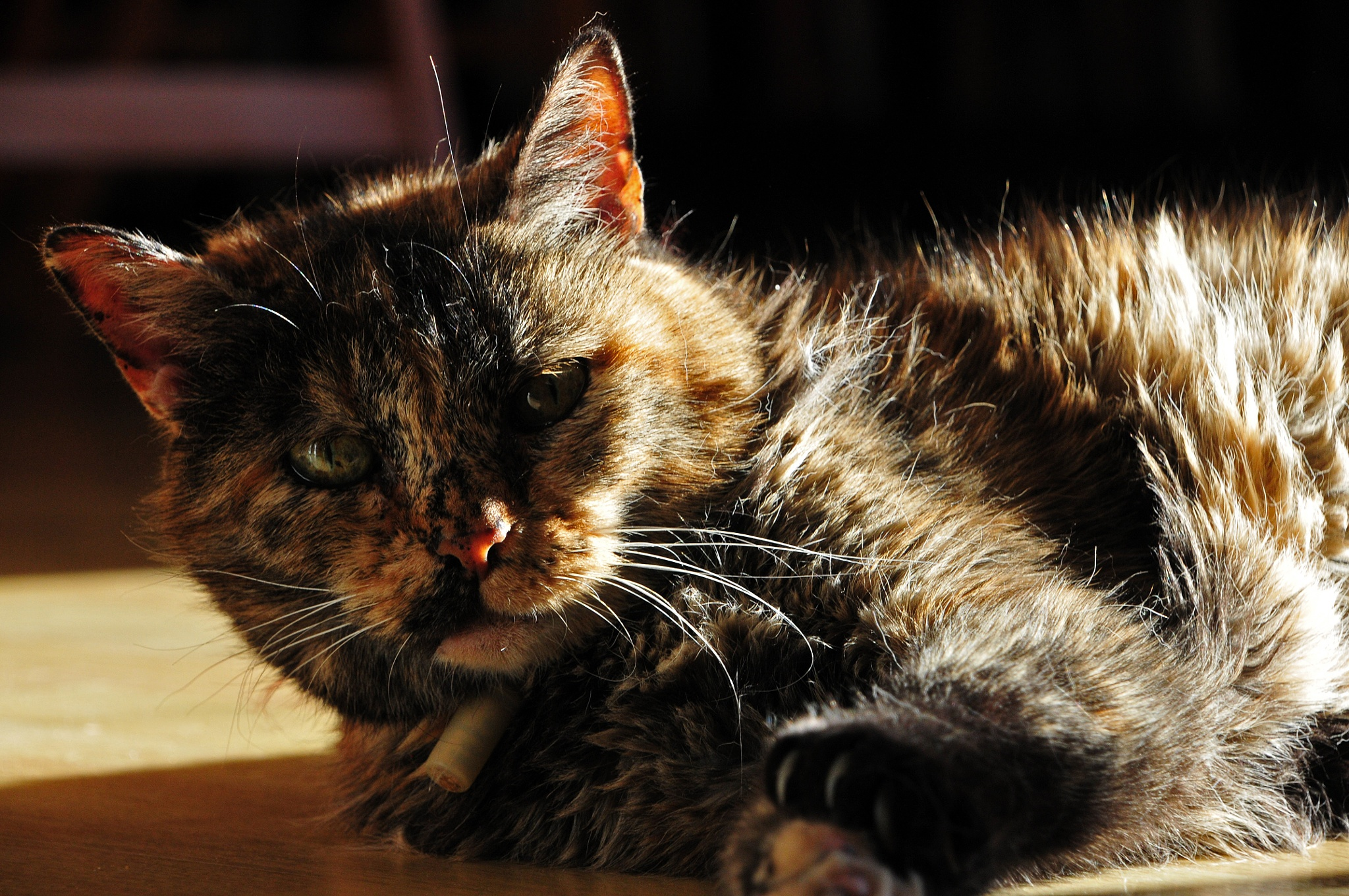 My Sunday morning sunbath by JeanGregoireMarin