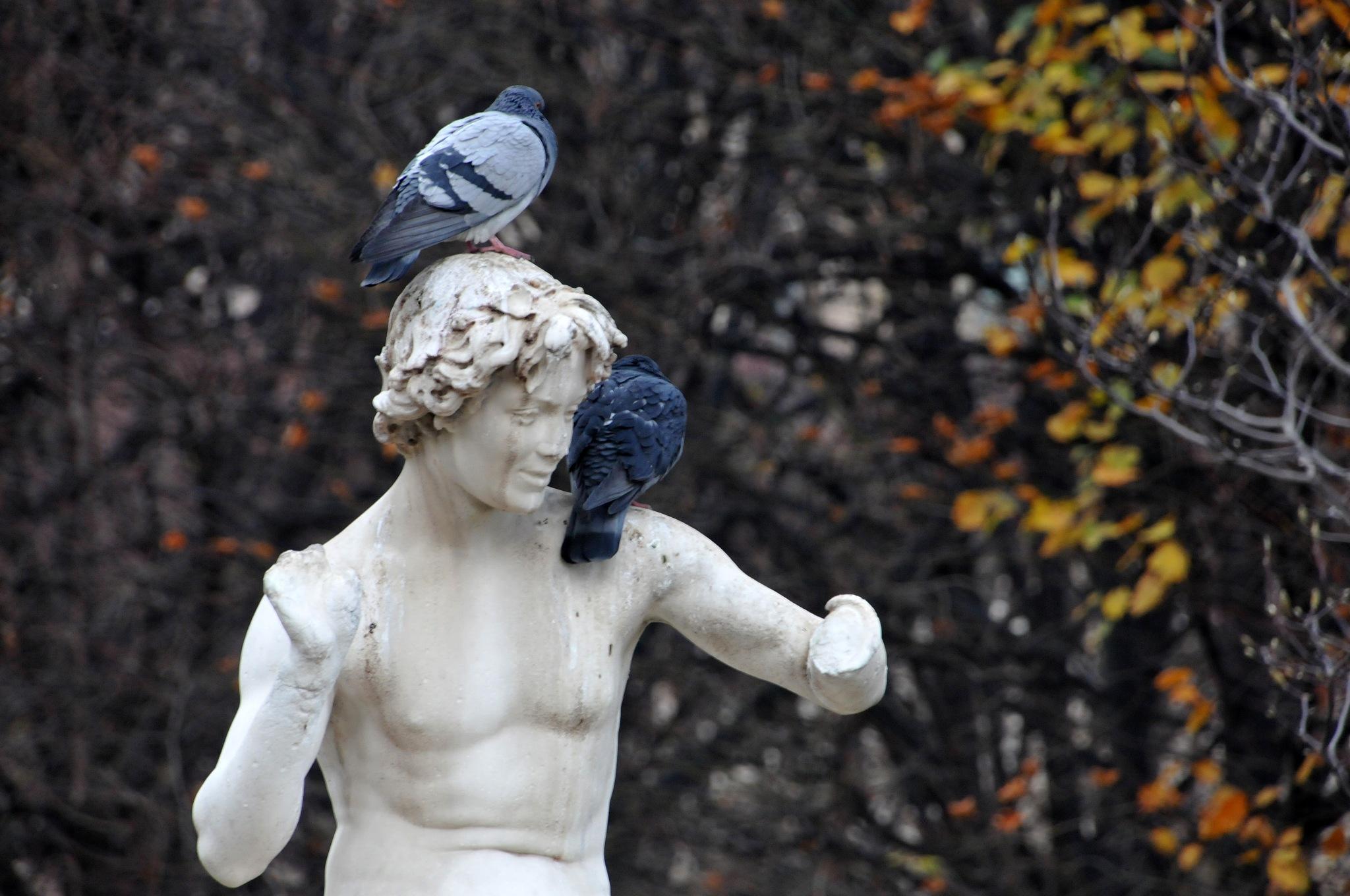 Parisian autumn perch by JeanGregoireMarin