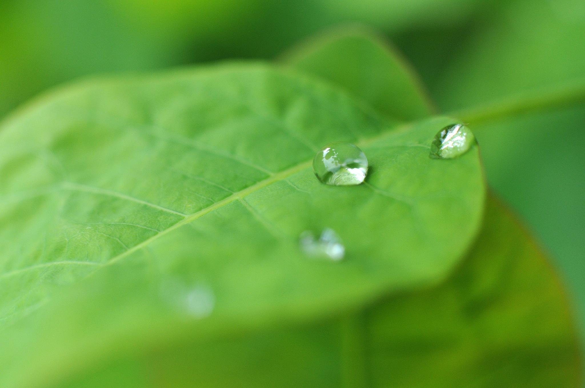 Green Tears by JeanGregoireMarin