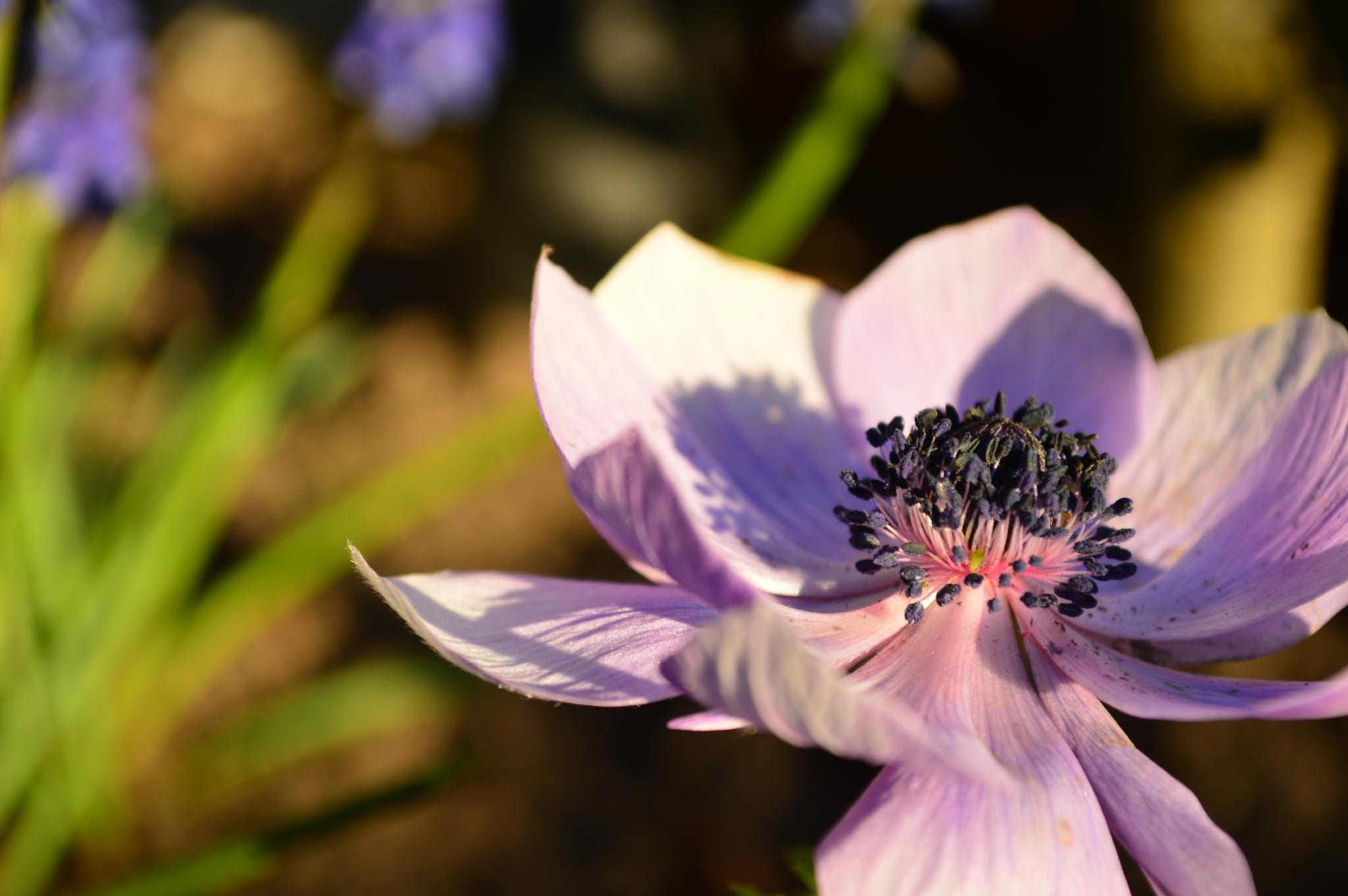 Purple Flower by Daniel Hobson