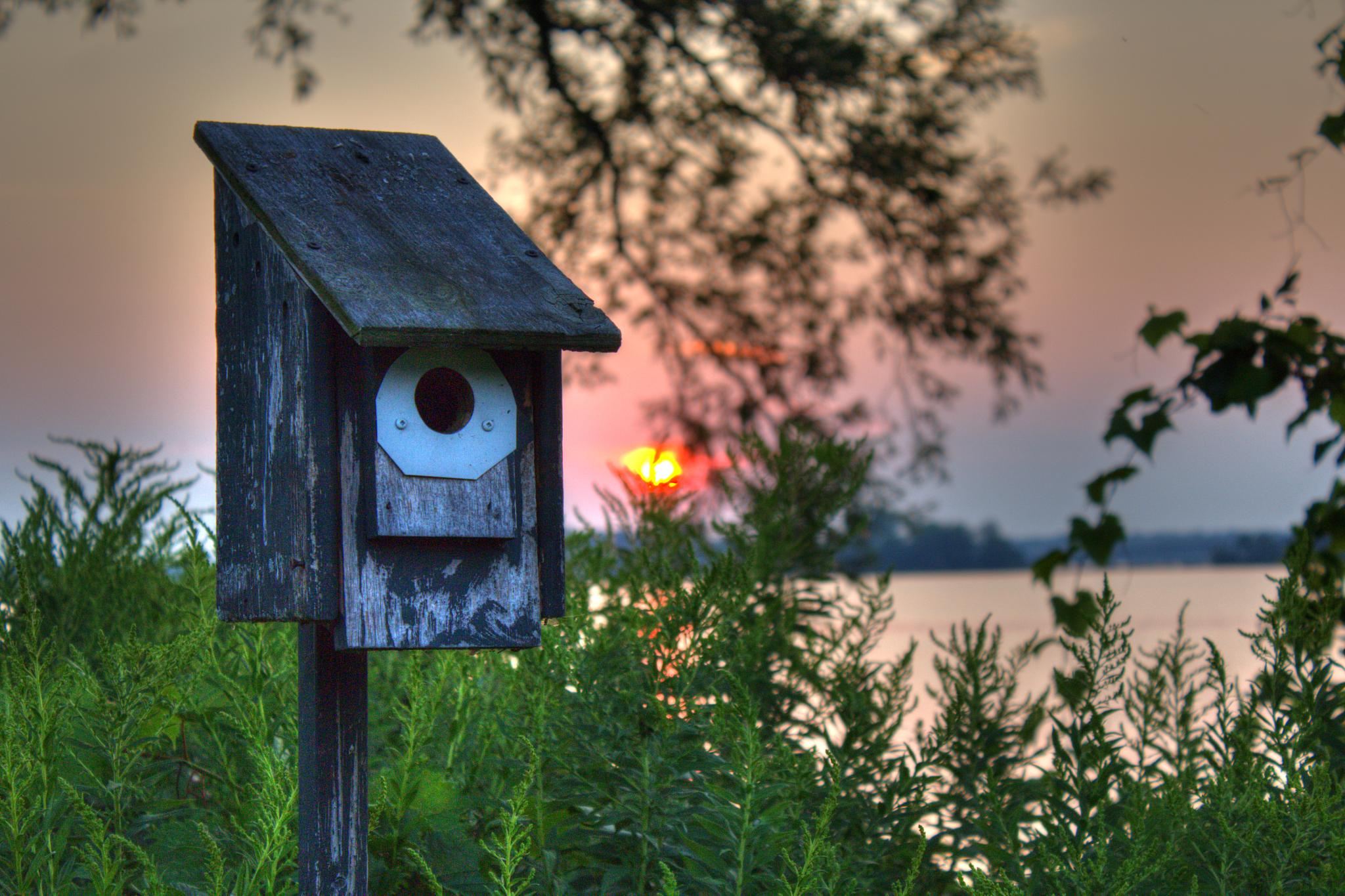 Birdhouse at Sunset by Heather Maga