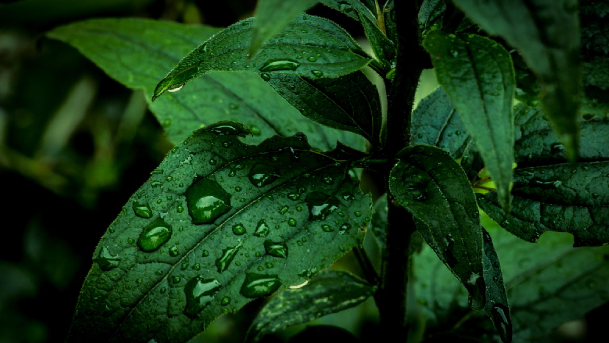 Water on leaf by Ajktsb