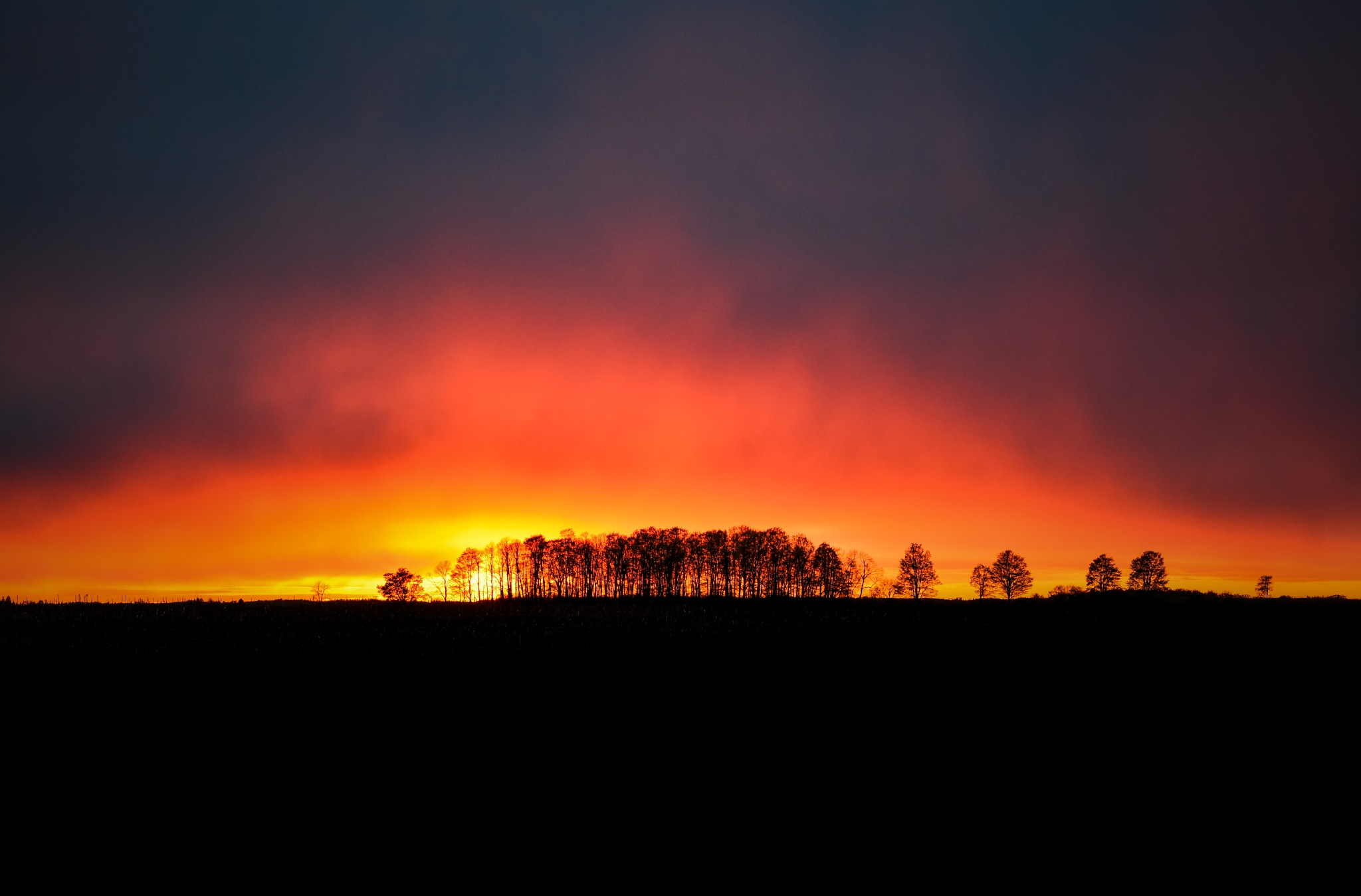 Trees On Fire by David Ryce