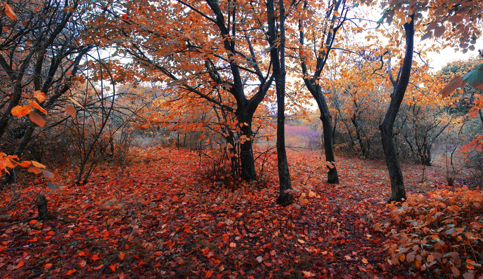 Autumn... by Milen Stoyanov