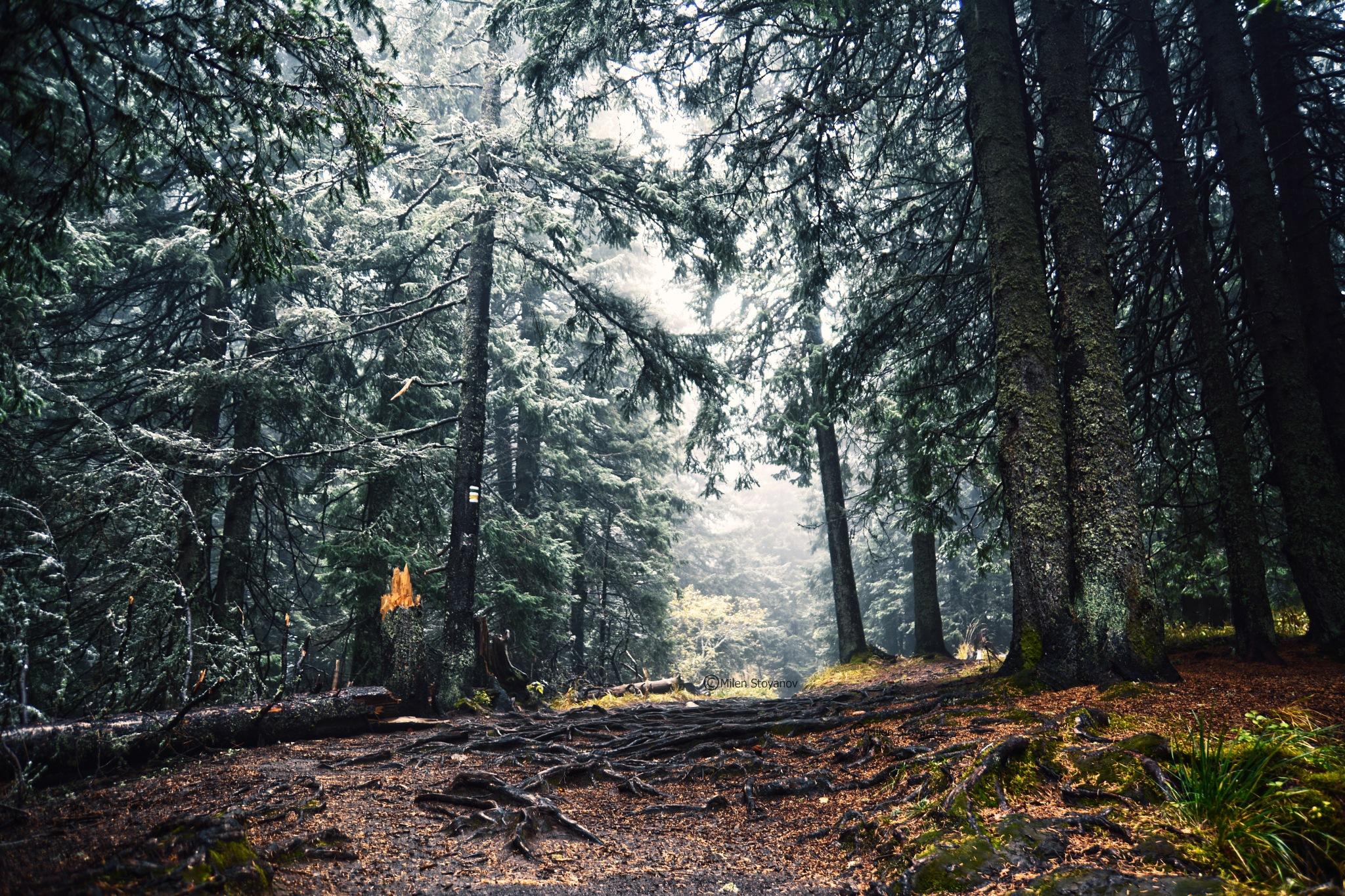 Deep in the woods by Milen Stoyanov