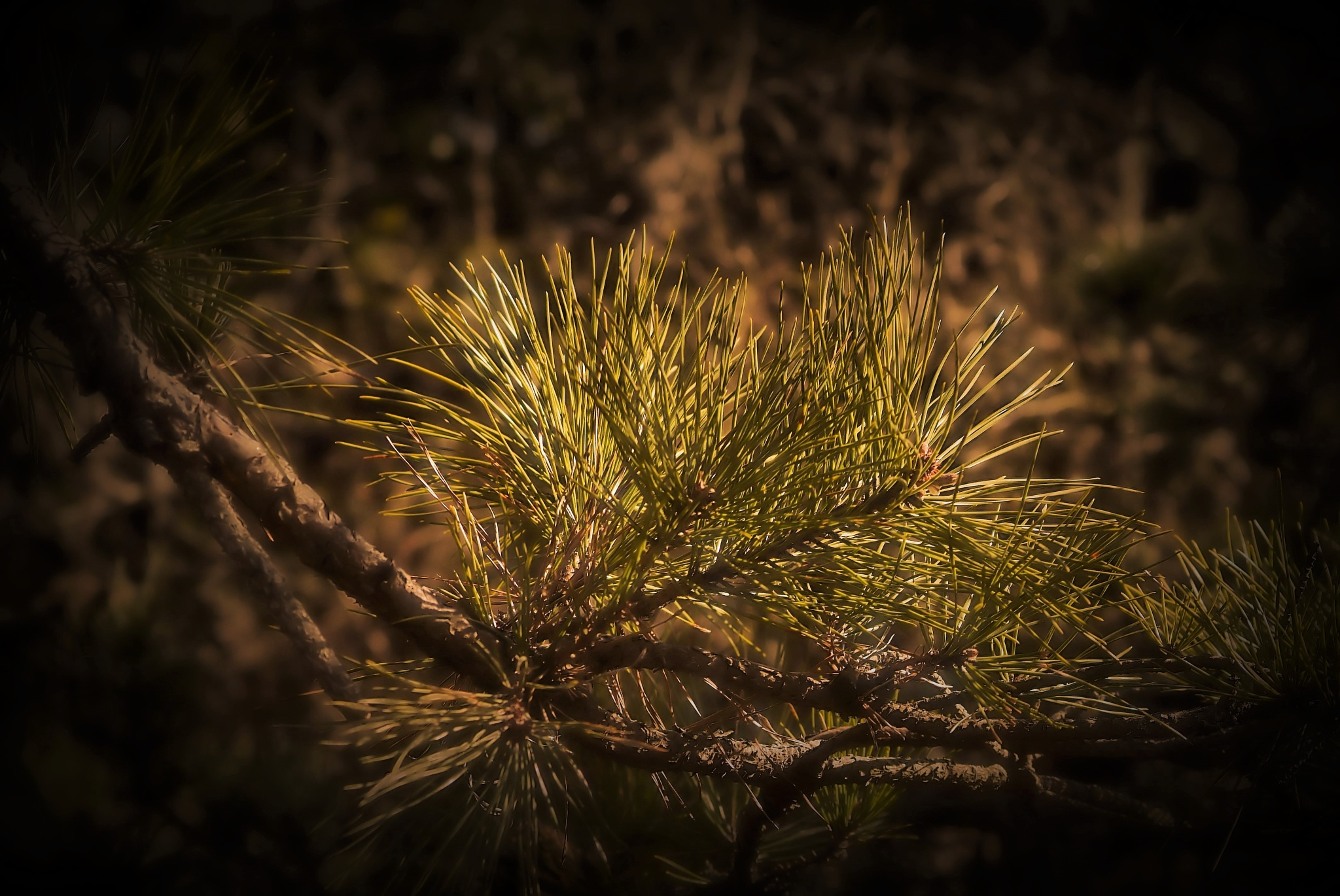 New growth by C michael anthony