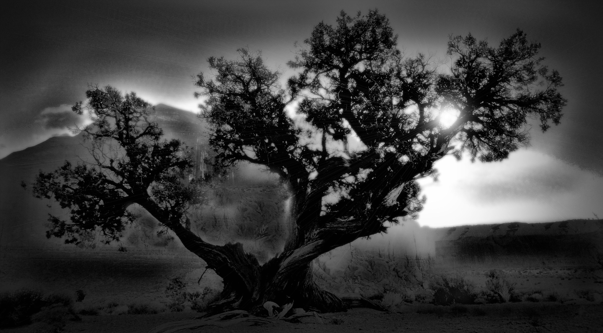 The Juniper Tree by C michael anthony
