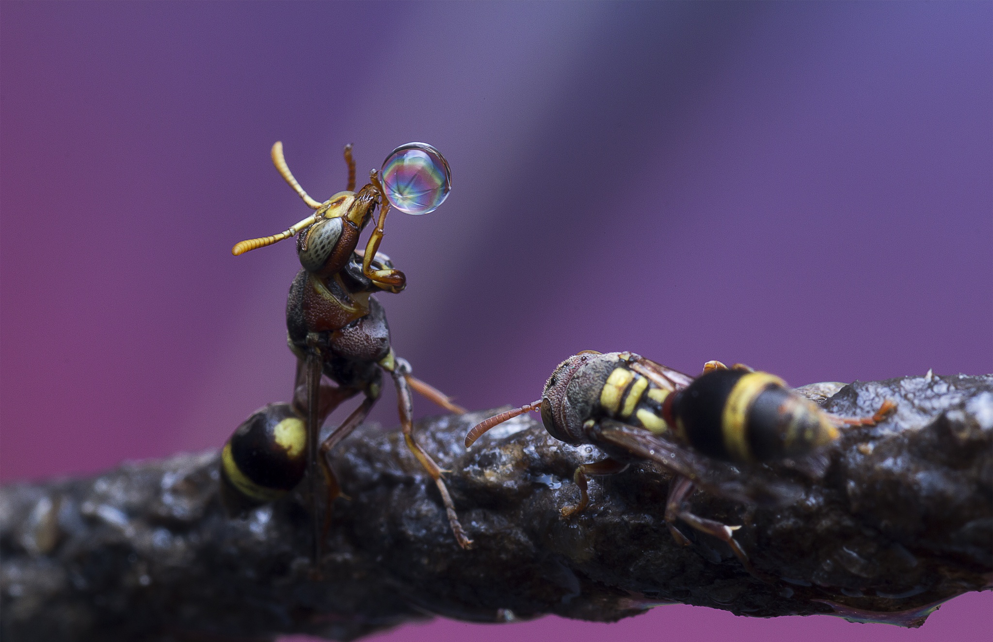 Wasps 151114A by carrot9817