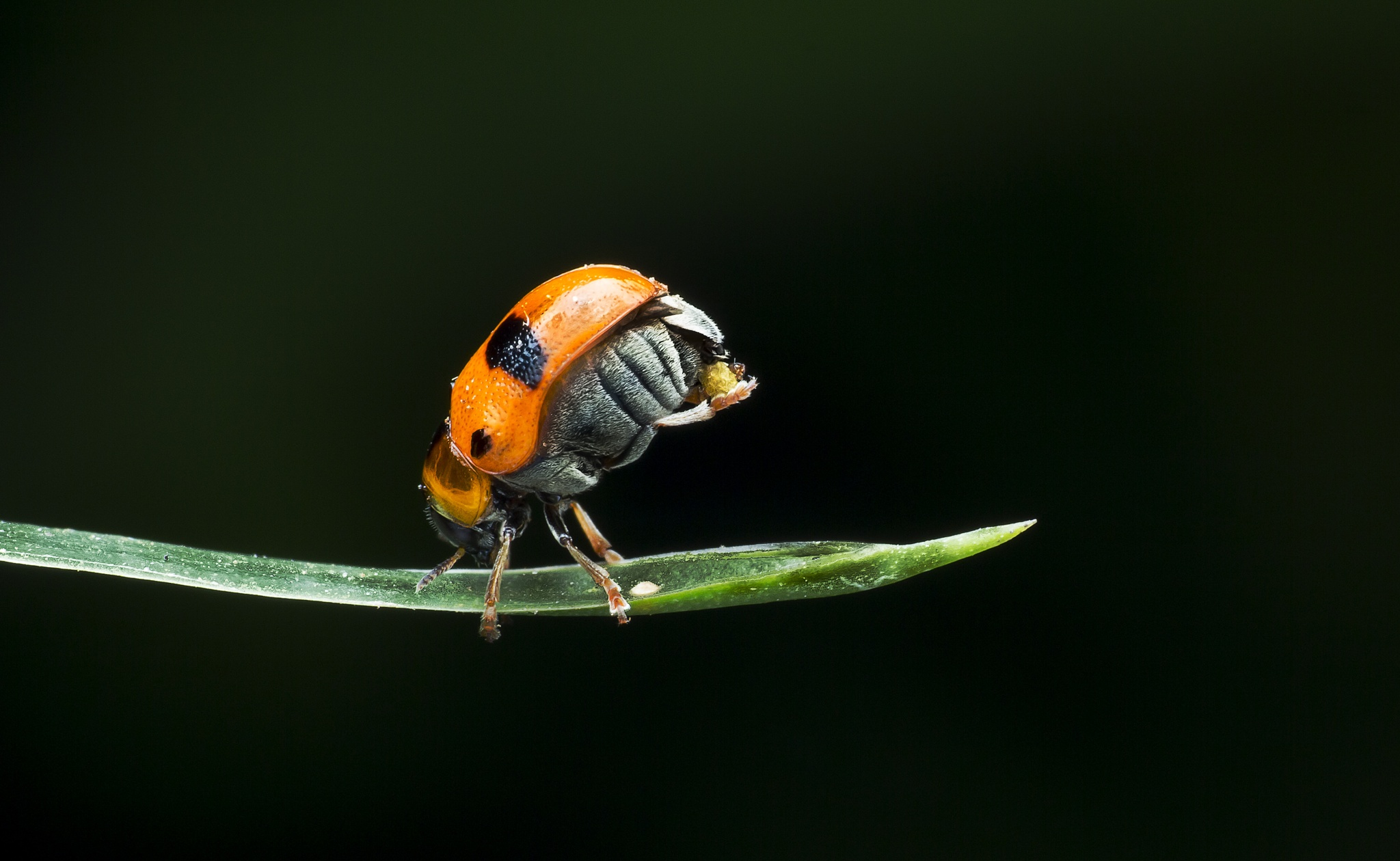Photo in Macro #macro #bug #colour