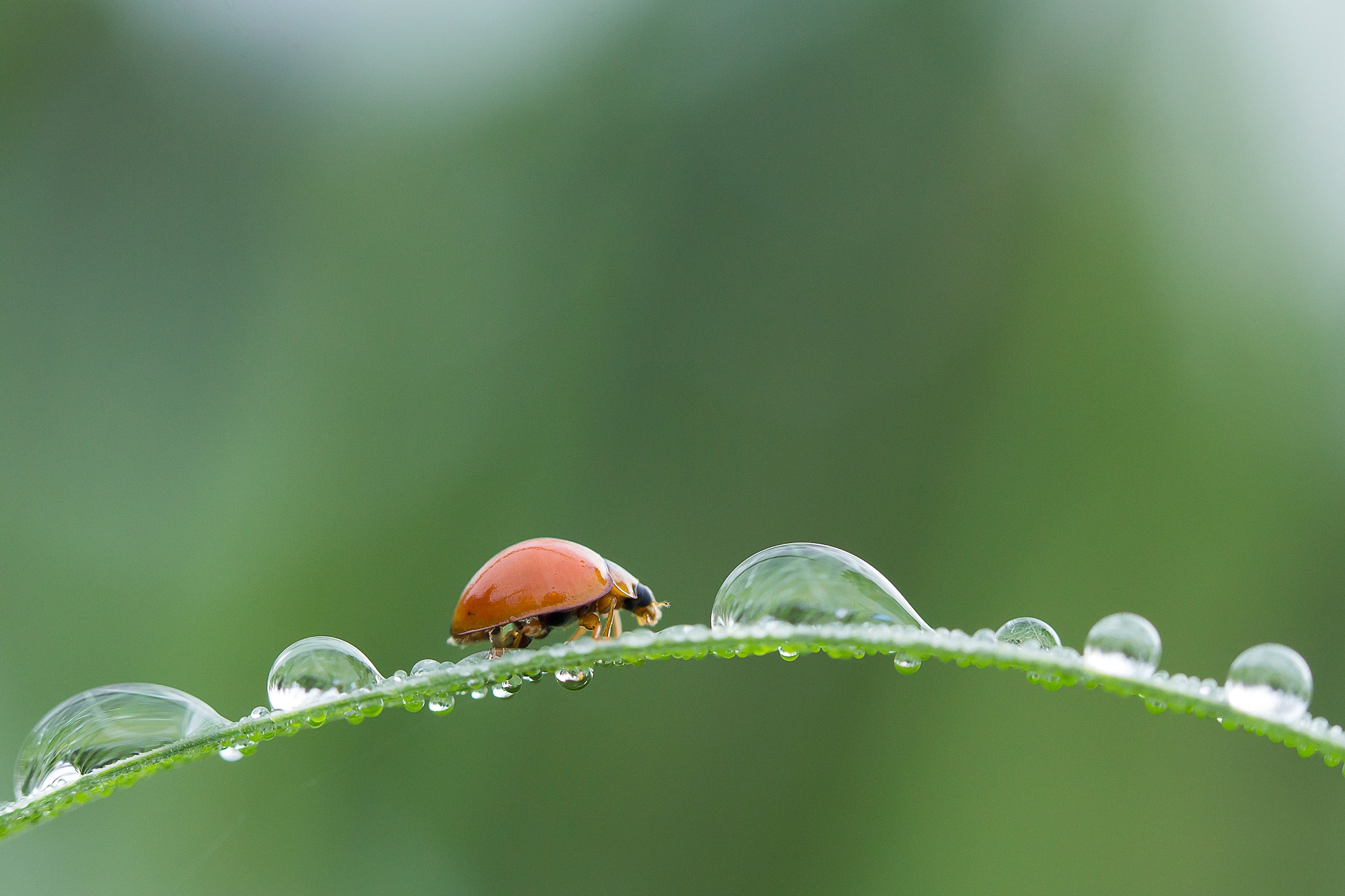 Bug And Water Droplets 180921A by carrot9817