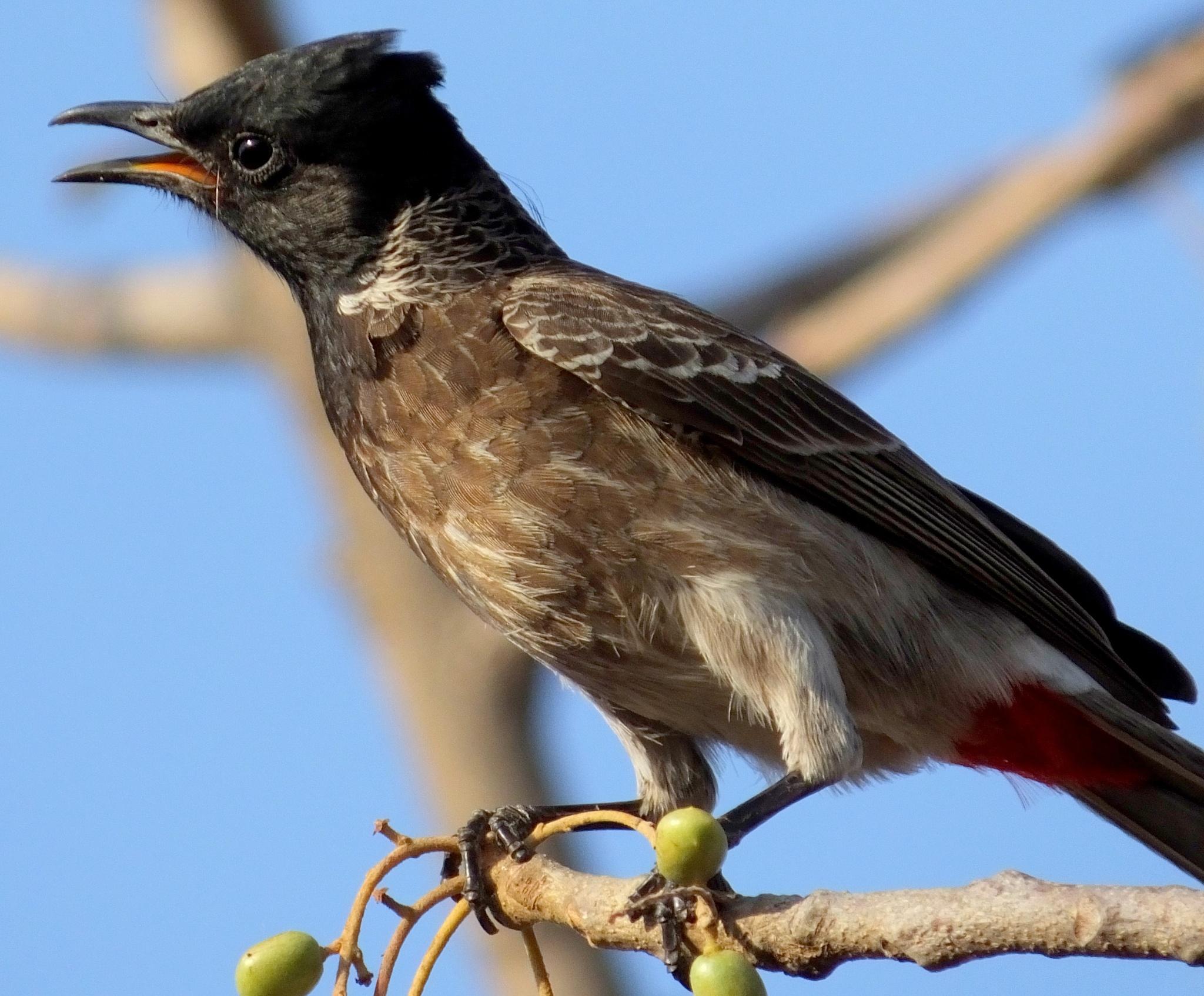 #Bird by Mansur Khan