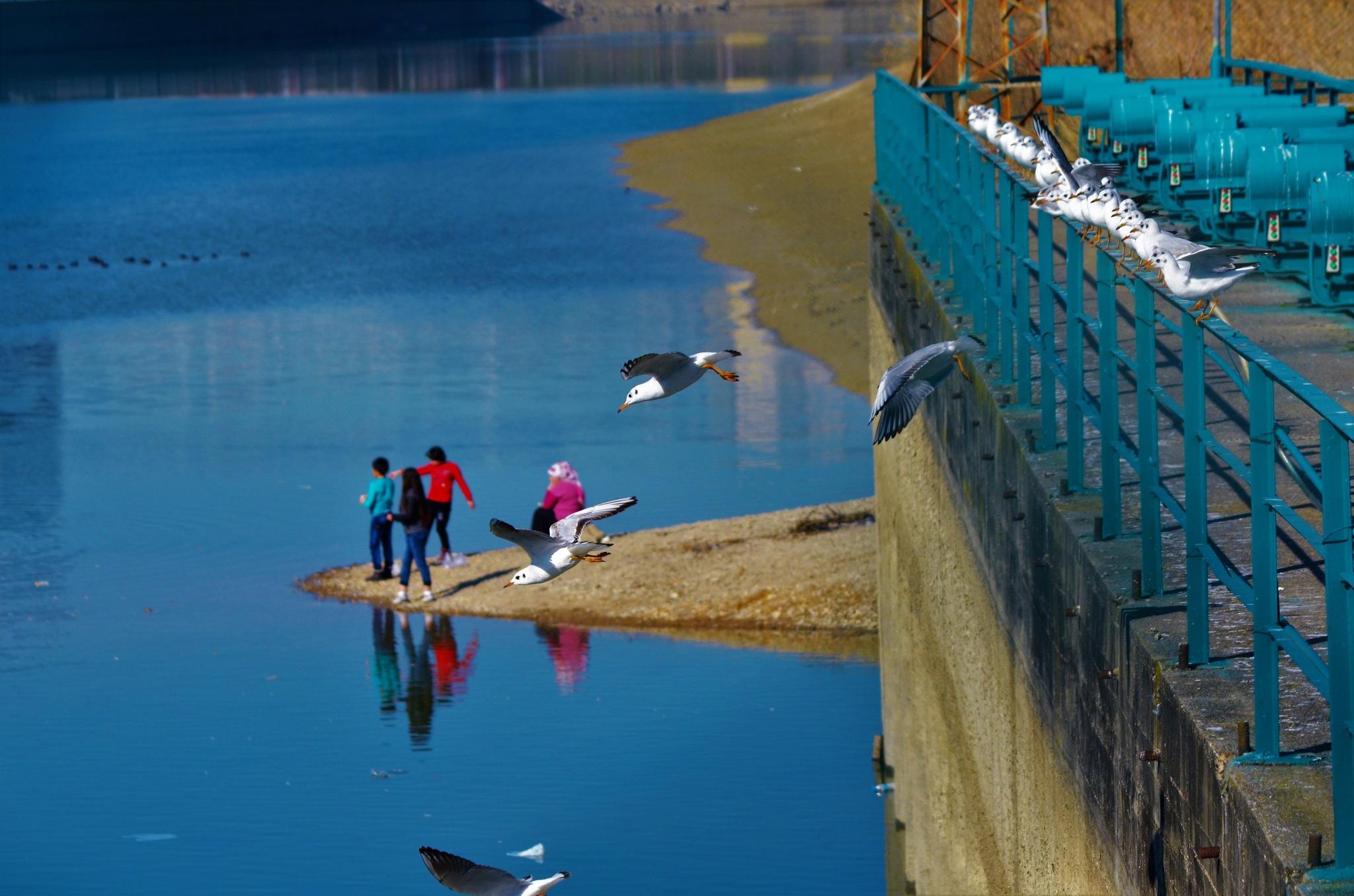 Kuşlar ve insanlar by Zeki Durak