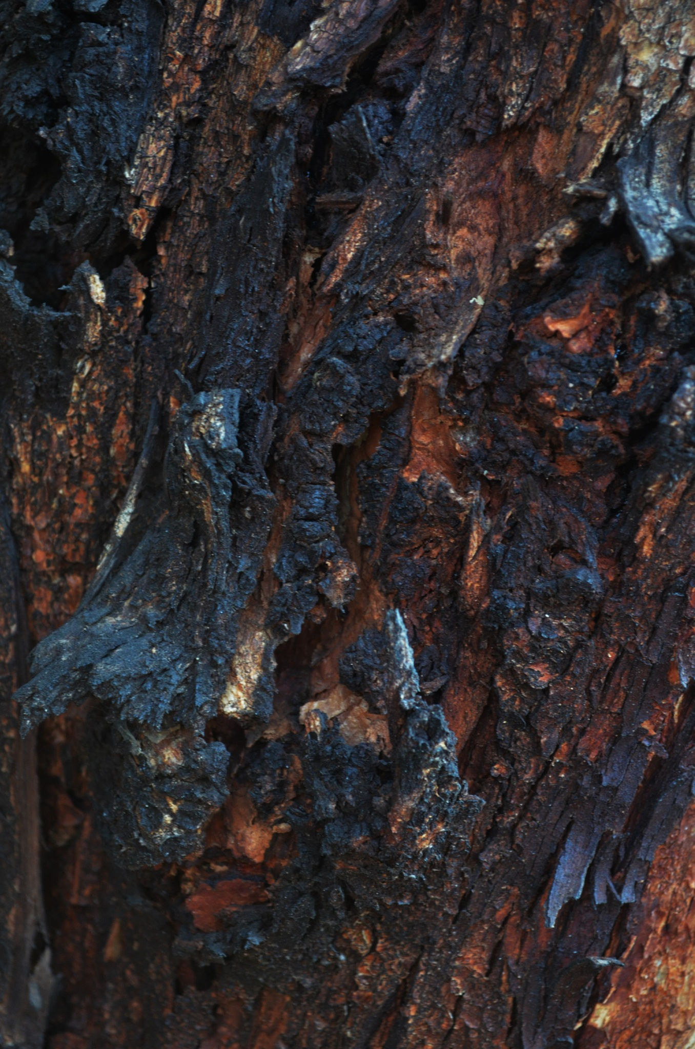 Yangından sonra by Zeki Durak