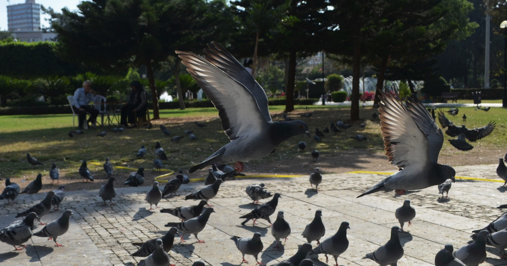 Atatürk parkında kuşlar-2 by Zeki Durak