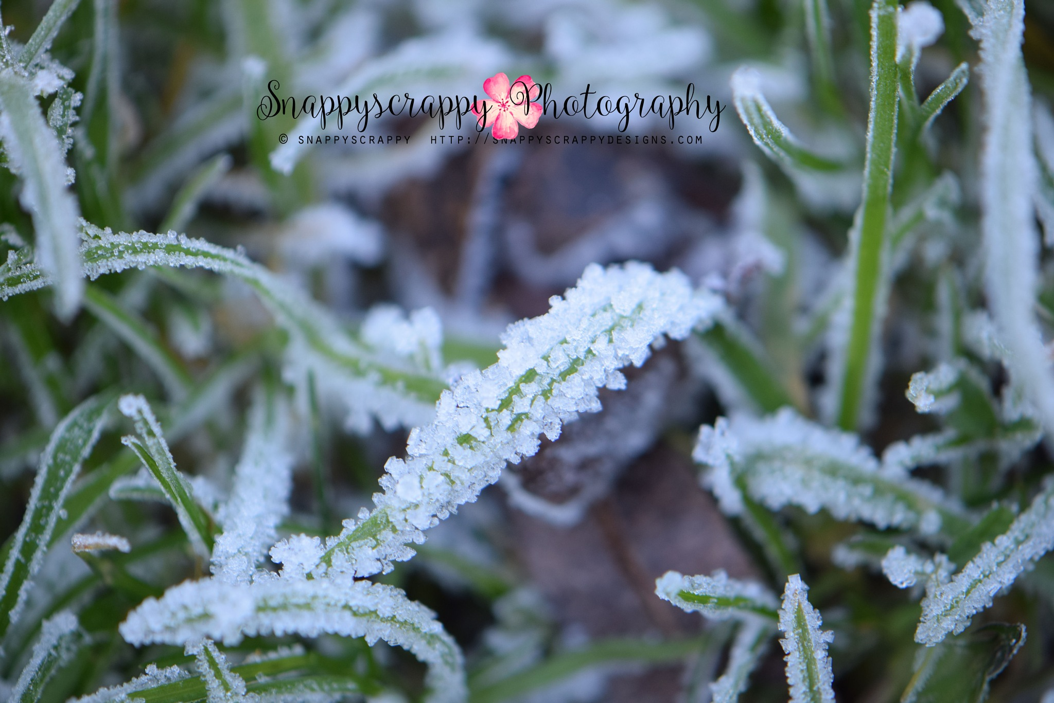 One Frosty Morning by  Snappyscrappy Photography
