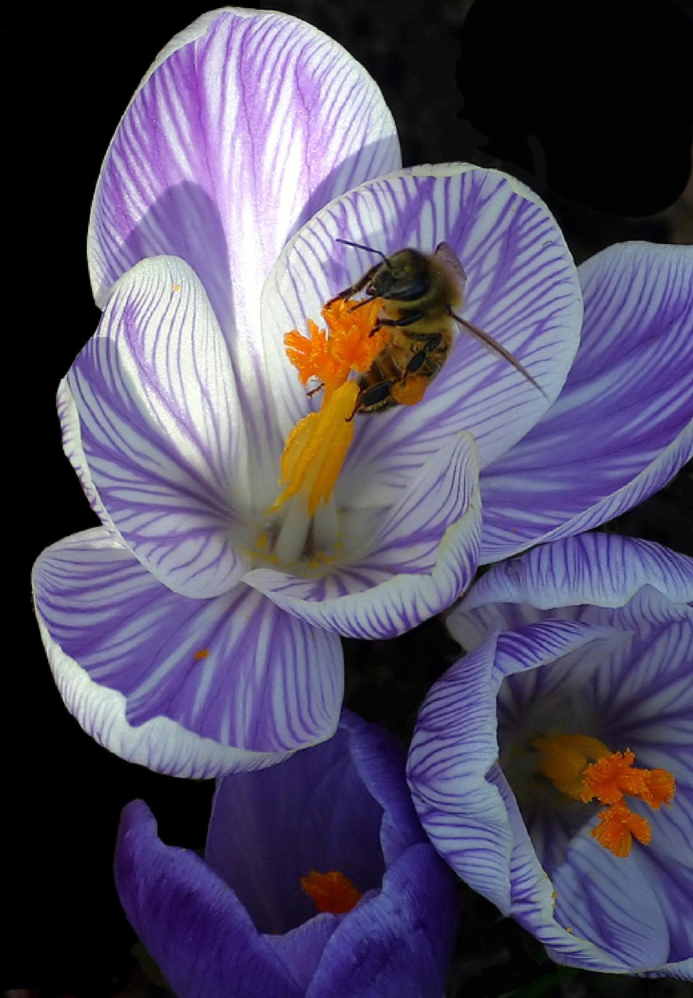 Flower Lover by monanorrman