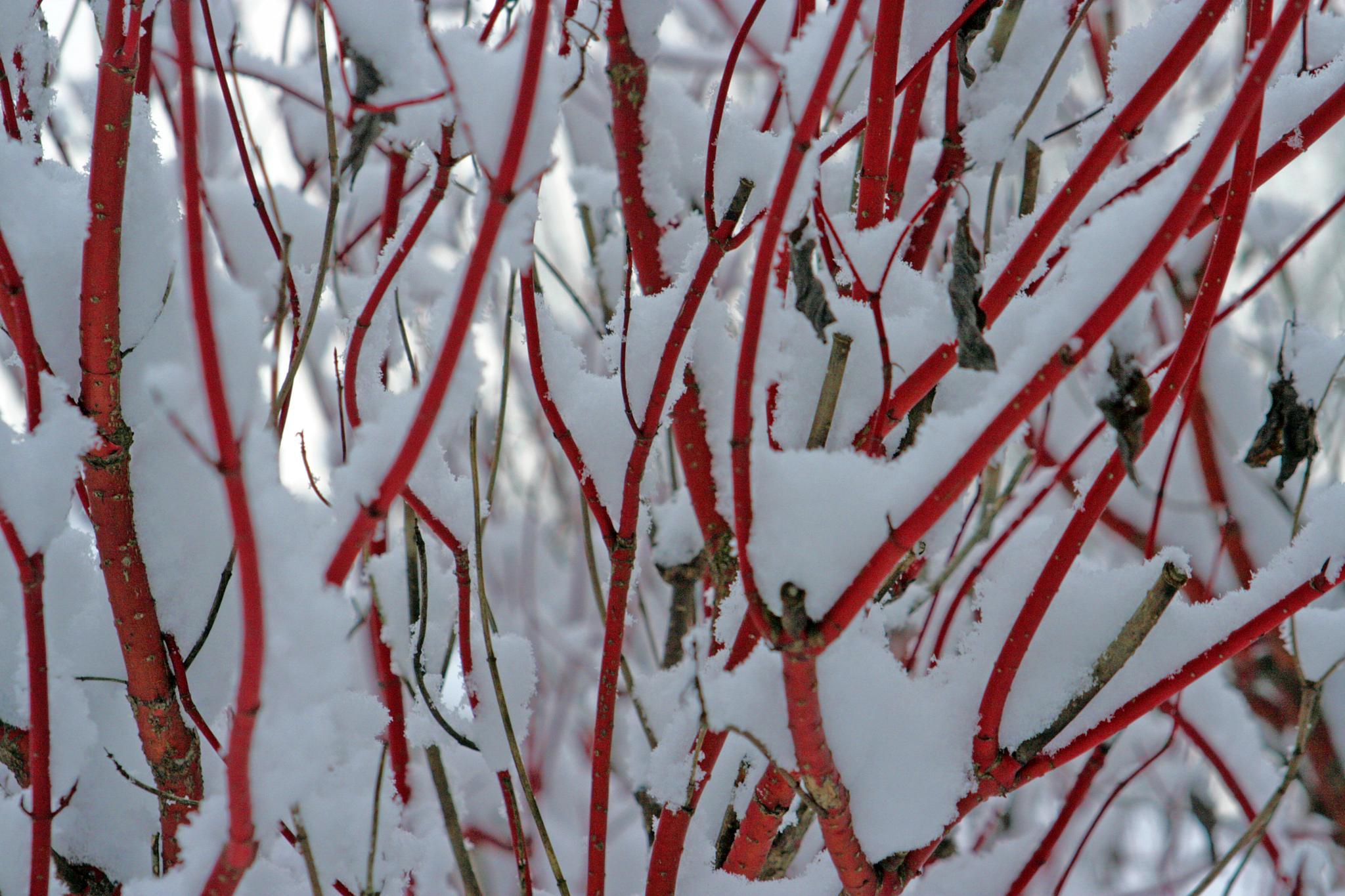 Red Winter by monanorrman