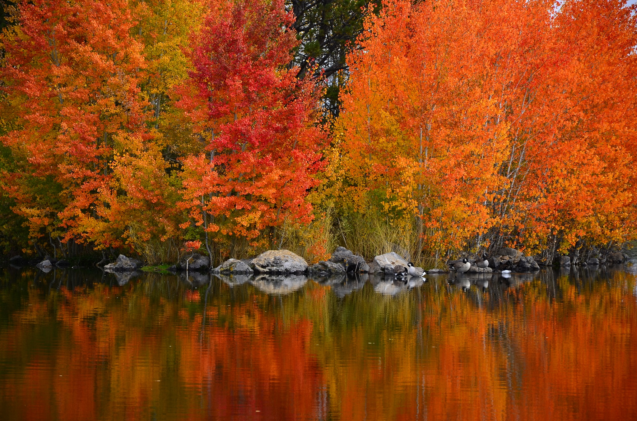 The beauty of fall by Alan Whitney
