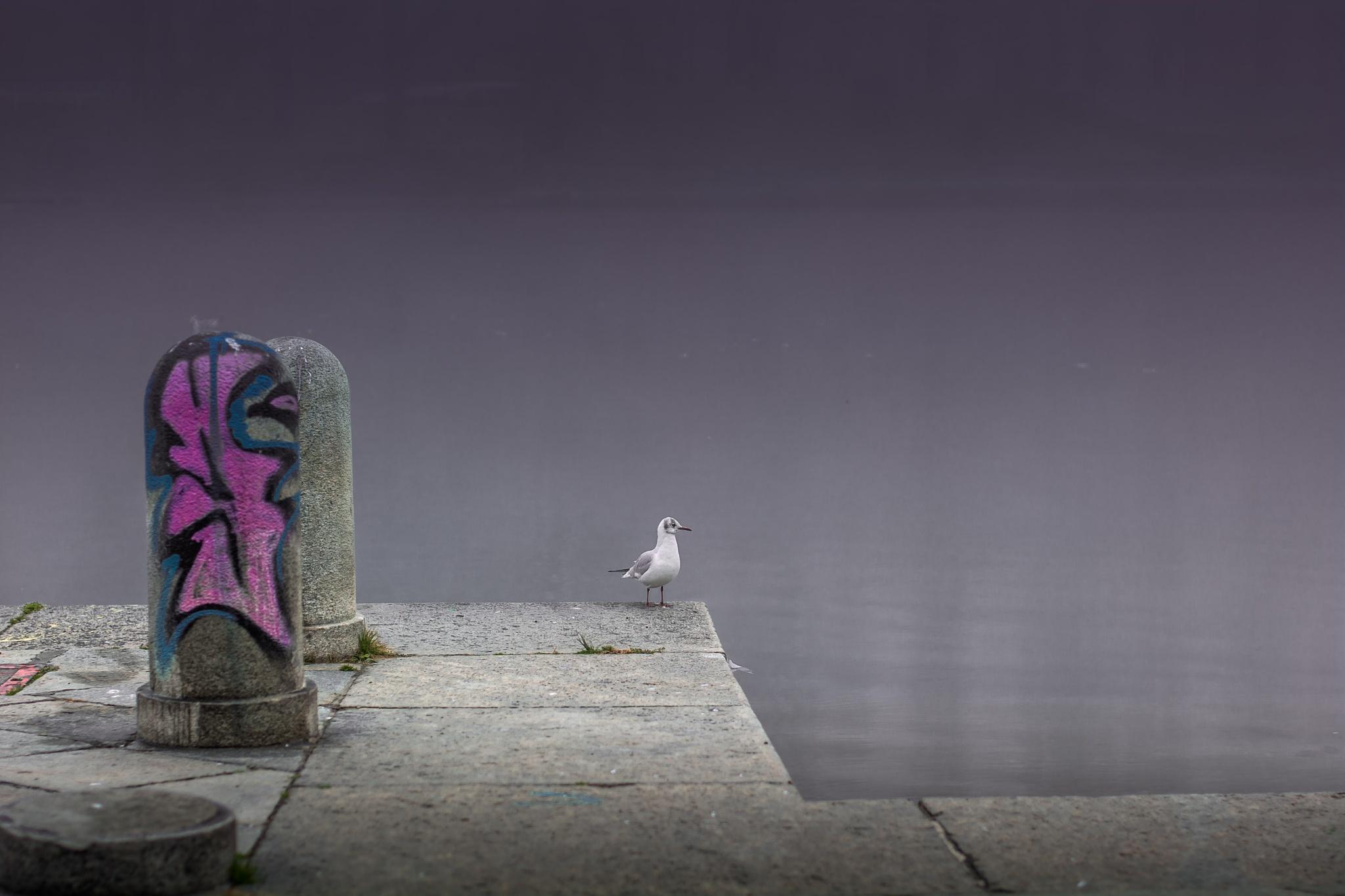 solitario by Luca Freni