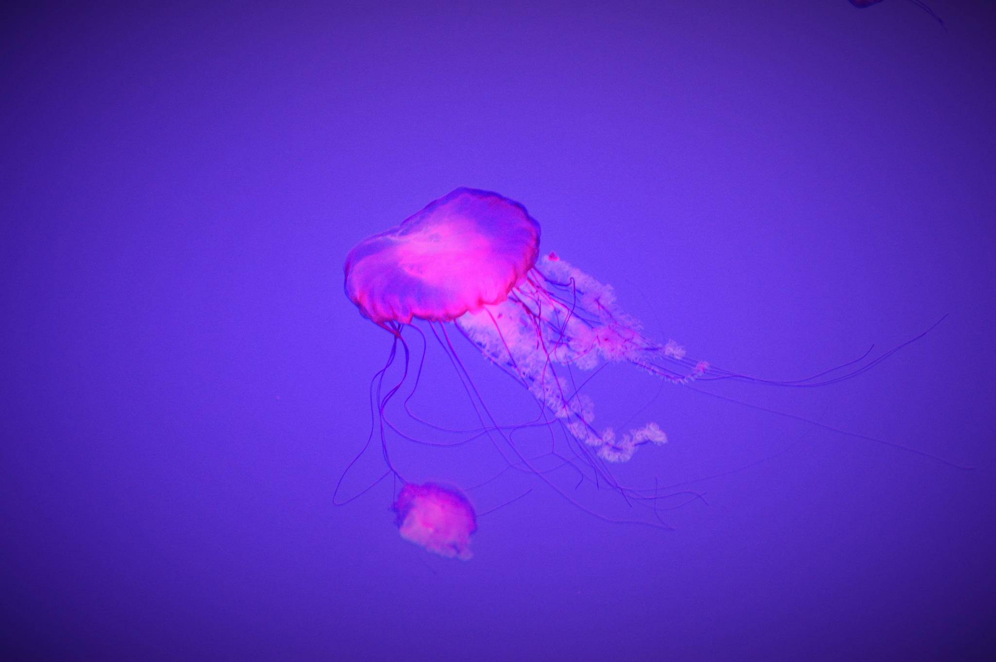 Jelly Fish by Dave Schickler