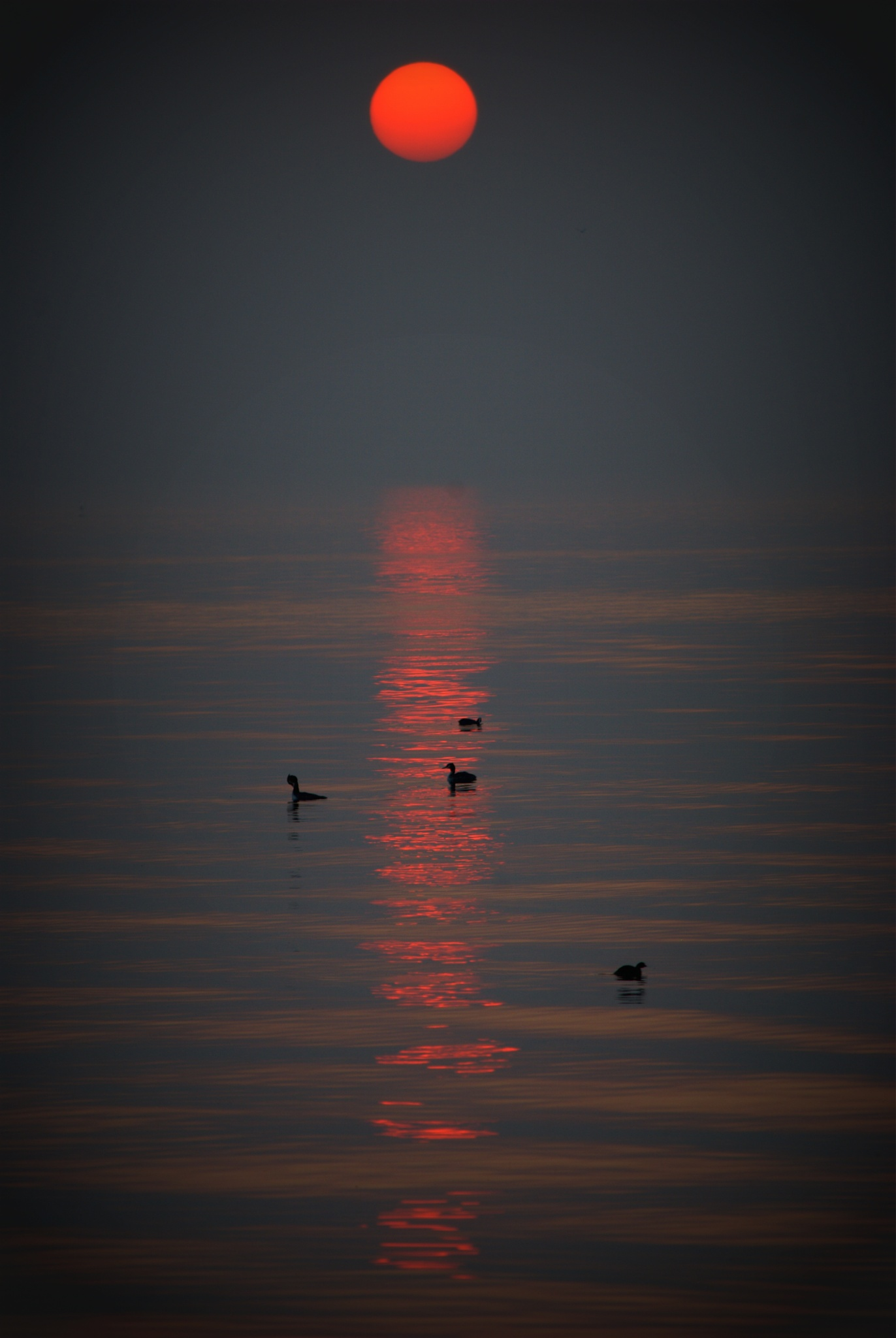 Sound of Silence by CarmeloRaineri