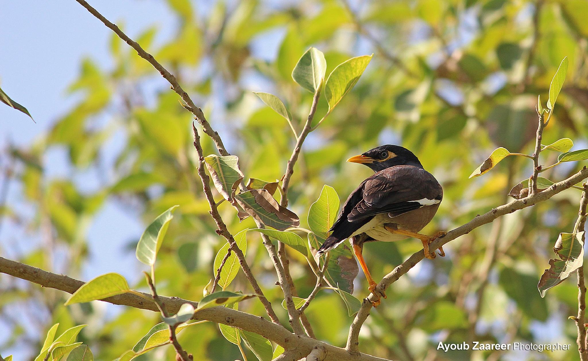 Bird by Ayoub Zaareer