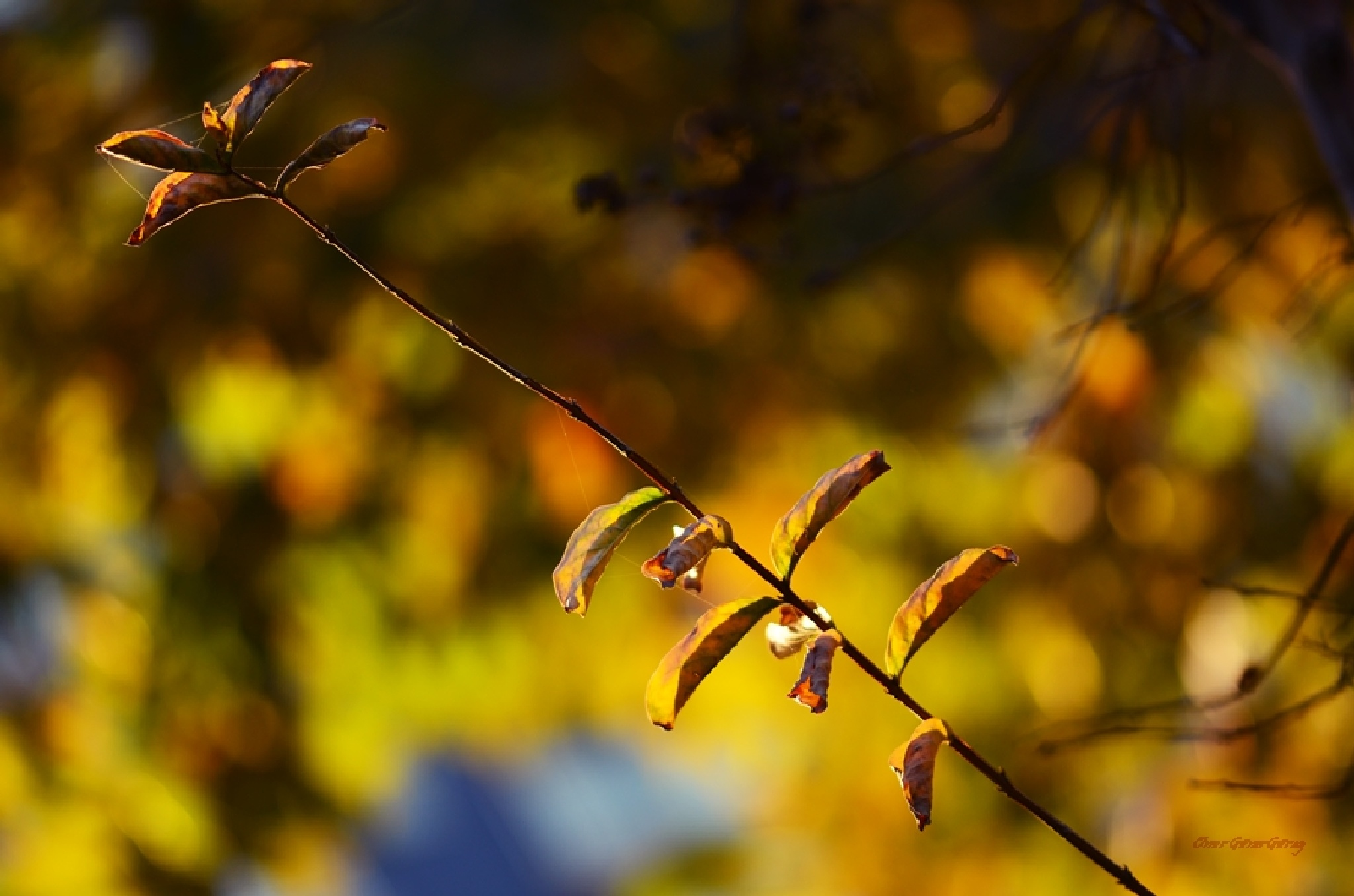 Sonbahar Işığı by Onur Güner Güray