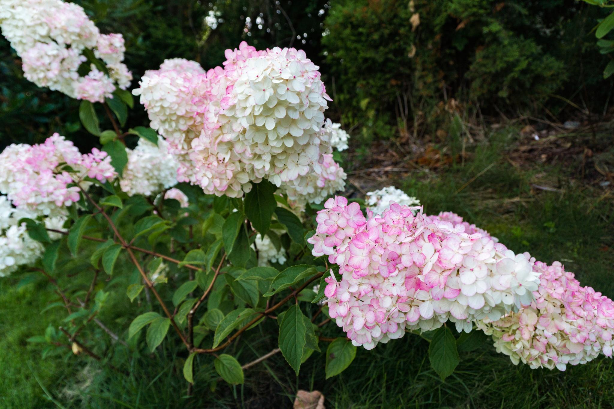 Flowers by Tormod Lindoe