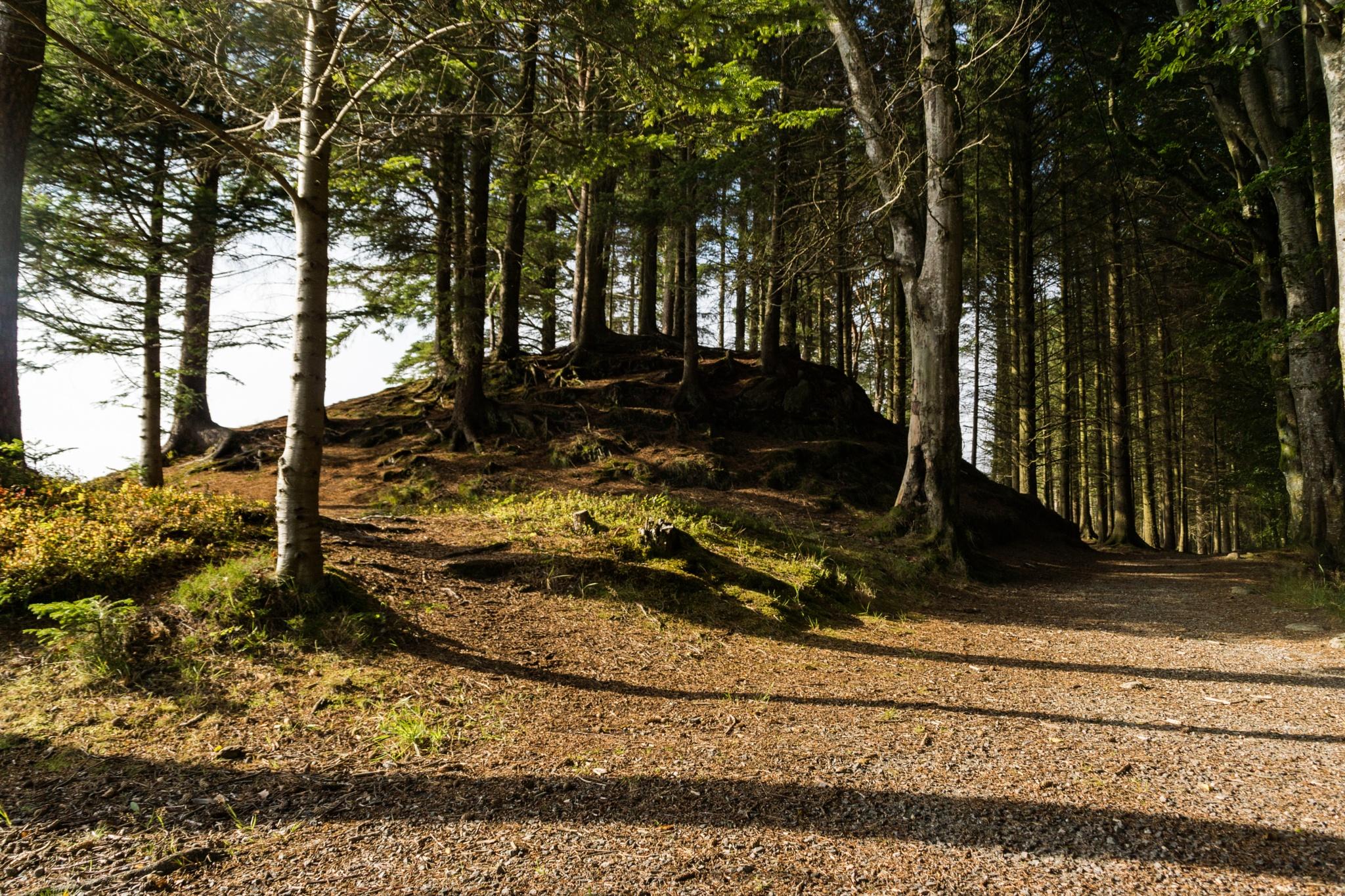 Trees and shadows by Tormod Lindoe