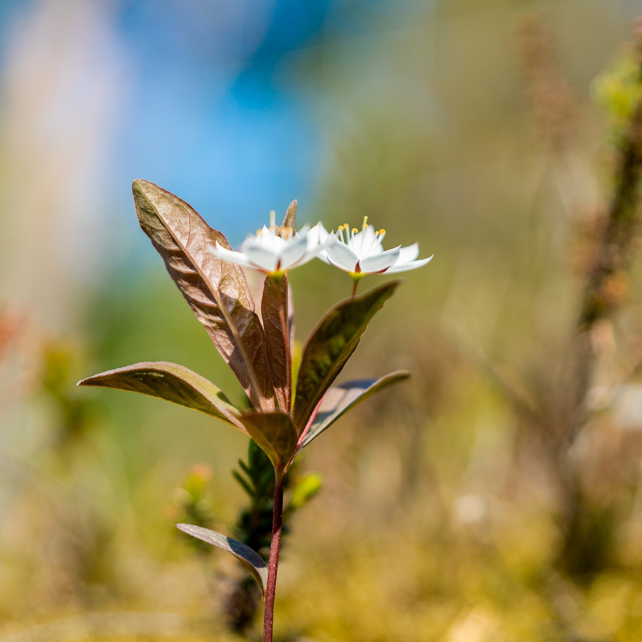 Flower by Tormod Lindoe