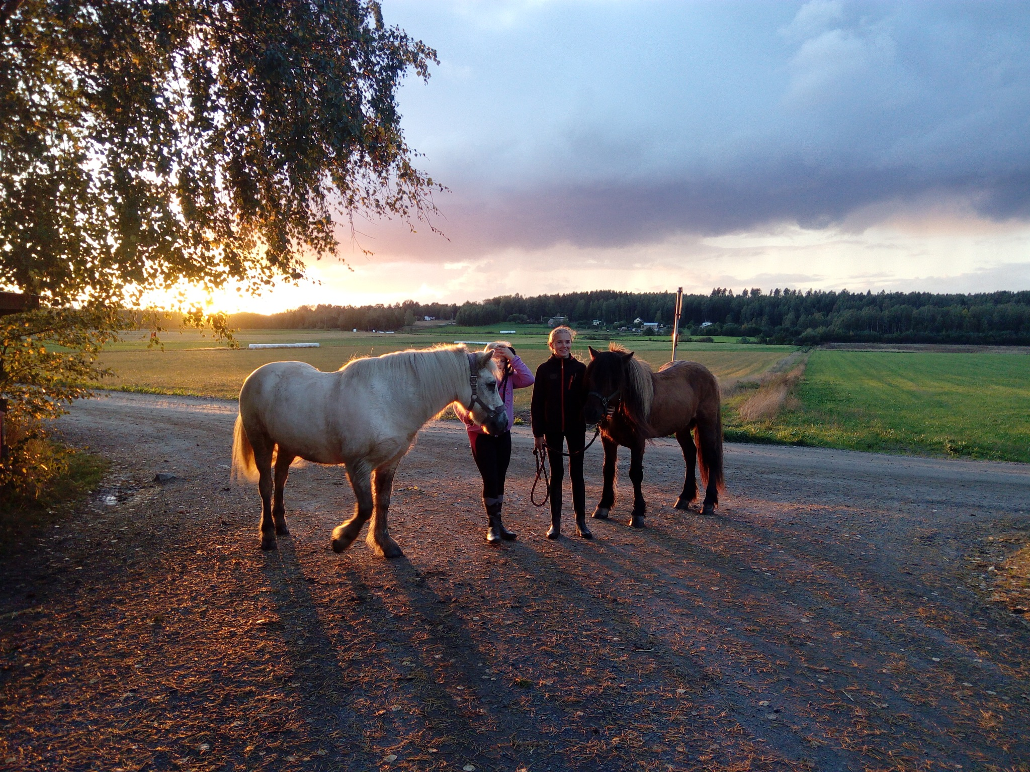 Sunset and horses by Katja Valonen