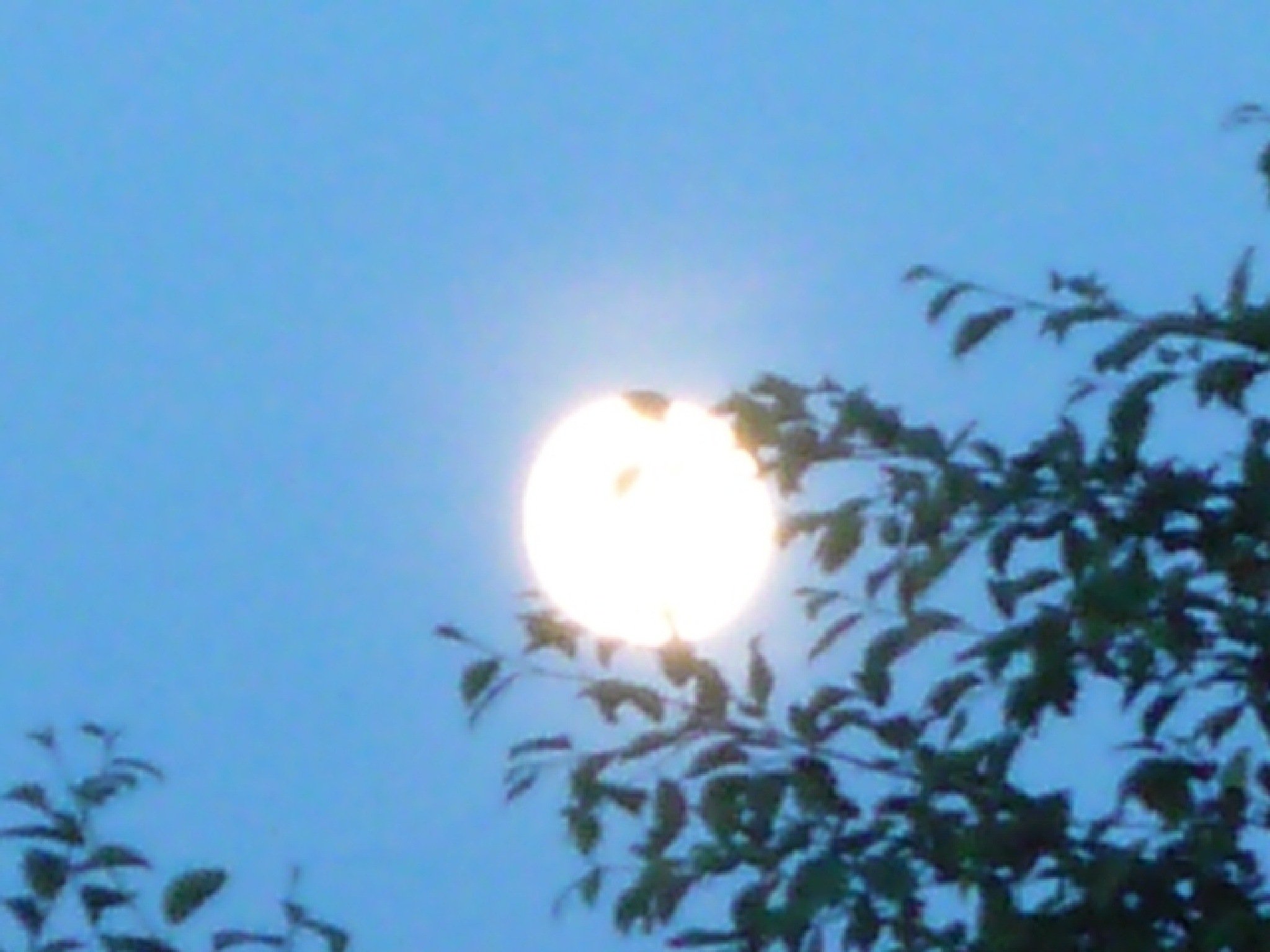 full moon by Jackie Wesley